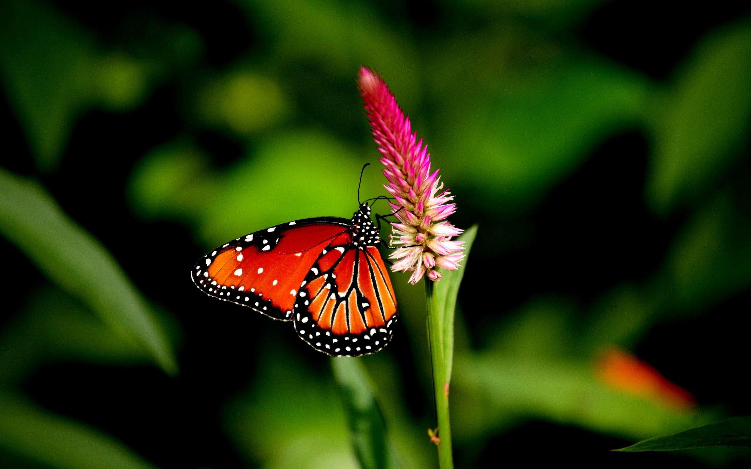 155843 скачать обои Цветок, Макро, Растение, Бабочка - заставки и картинки бесплатно