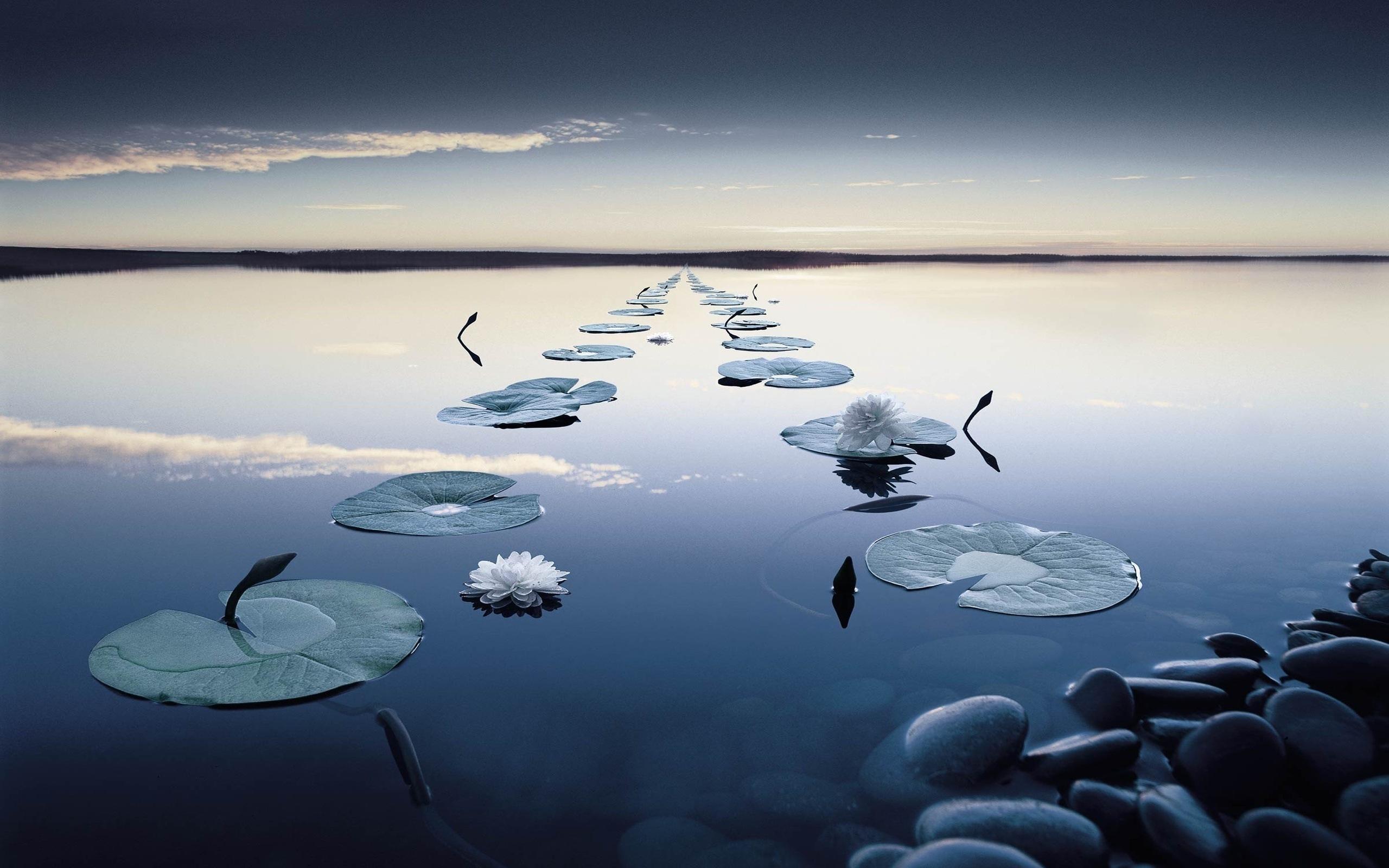 15856 скачать обои Пейзаж, Вода, Лилии, Озера - заставки и картинки бесплатно