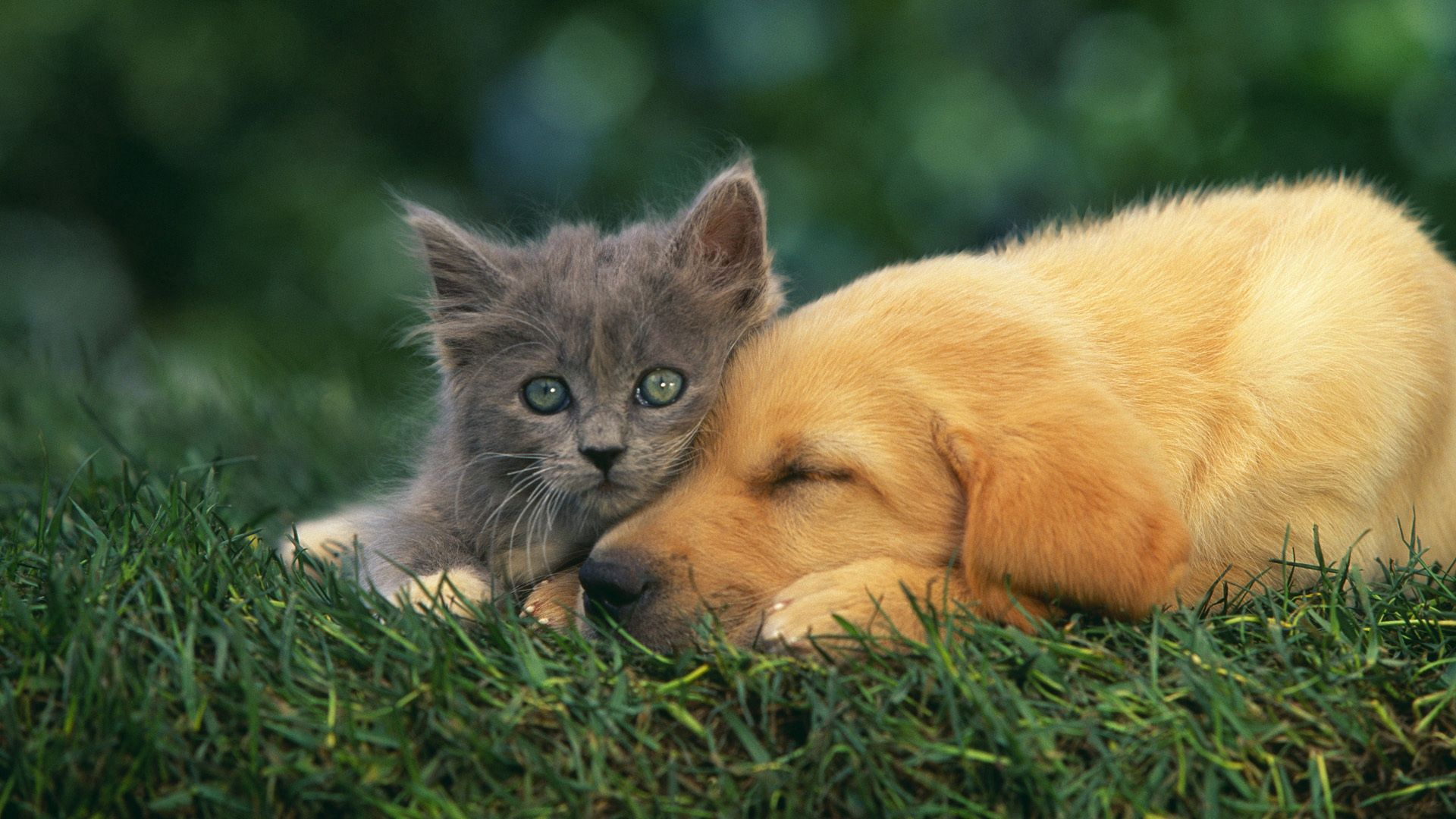 153954 download wallpaper Animals, Kitty, Kitten, Puppy, Couple, Pair, To Lie Down, Lie, Sleep, Dream screensavers and pictures for free