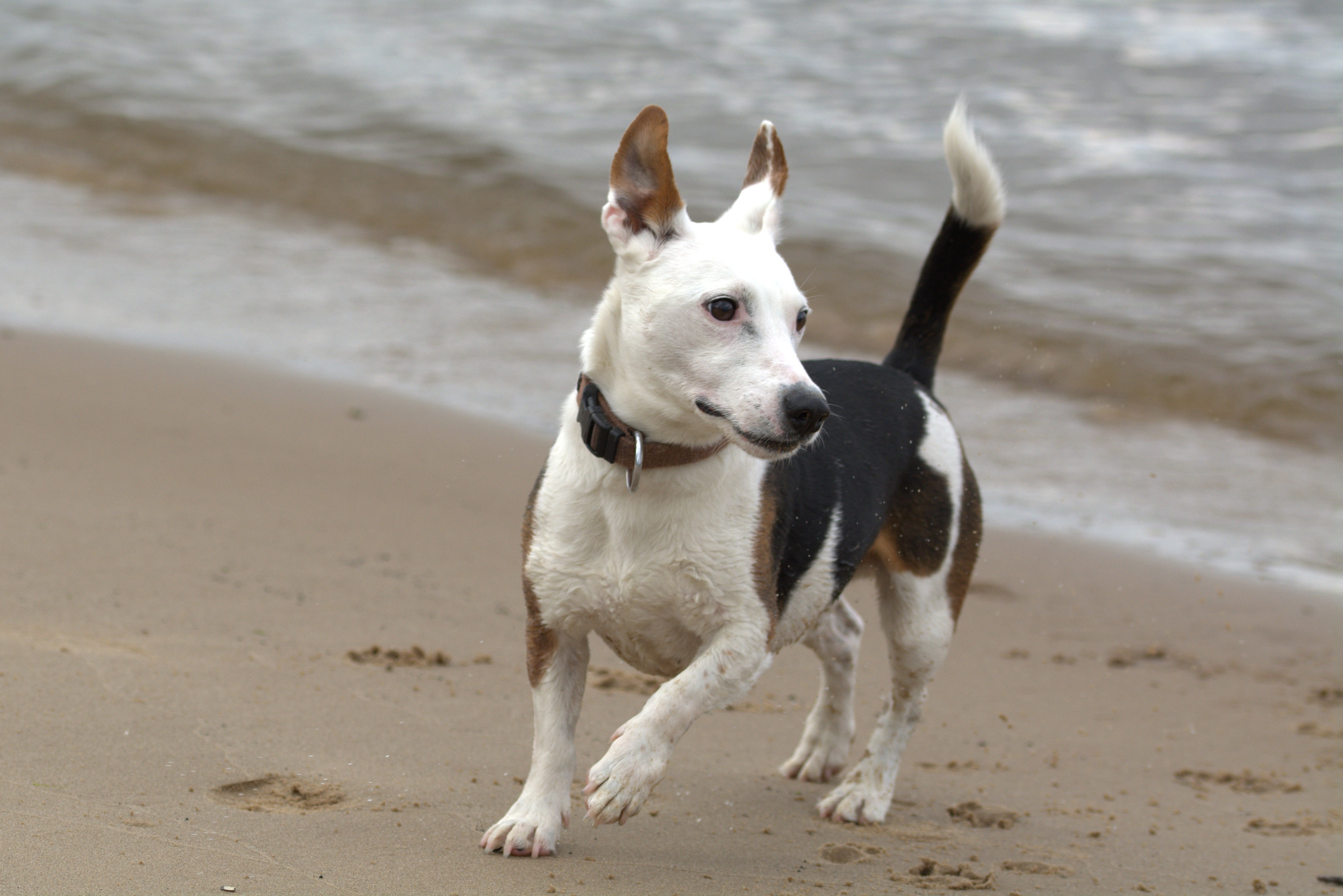 Download free Terrier HD pictures