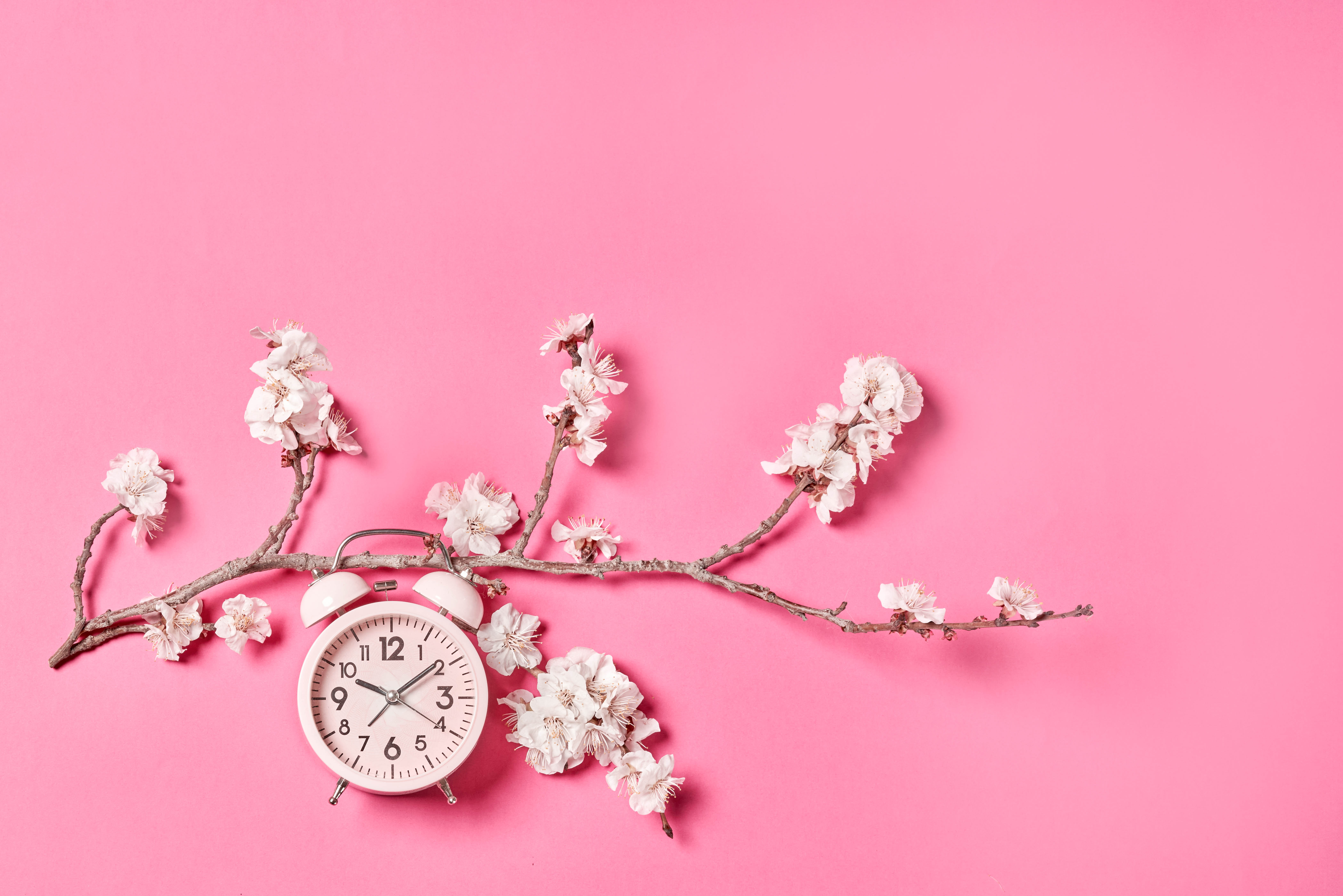 125239 Screensavers and Wallpapers Sakura for phone. Download Flowers, Pink, Clock, Sakura, Minimalism, Alarm Clock pictures for free