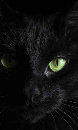 129478 download wallpaper Animals, Black Cat, Muzzle, Sight, Opinion screensavers and pictures for free