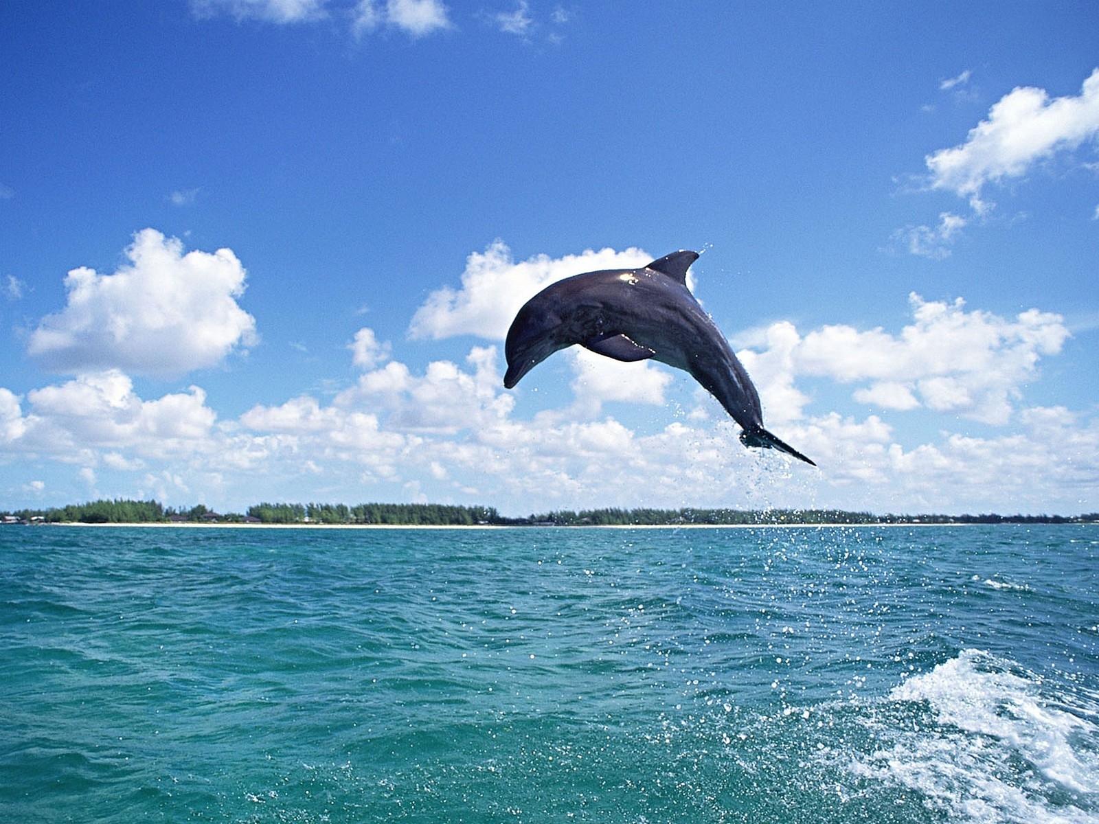 54 descargar fondo de pantalla Animales, Agua, Cielo, Delfines, Peces: protectores de pantalla e imágenes gratis