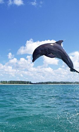 54 download wallpaper Animals, Water, Sky, Dolfins, Fishes screensavers and pictures for free