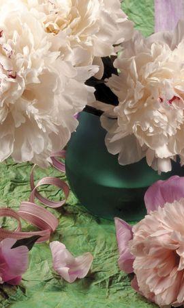 2645 скачать обои Растения, Цветы, Хризантемы - заставки и картинки бесплатно