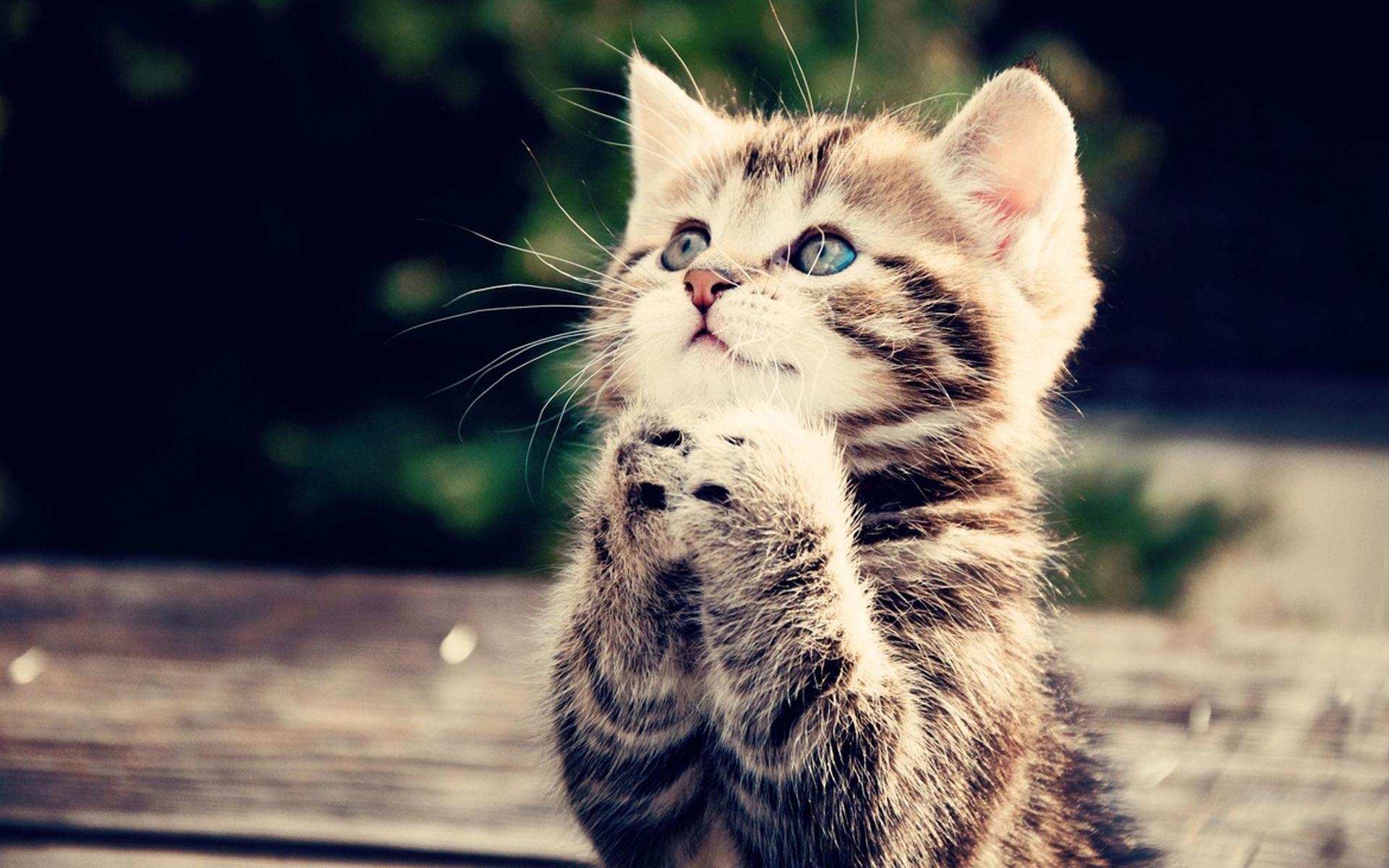 45426 descargar fondo de pantalla Animales, Gatos: protectores de pantalla e imágenes gratis