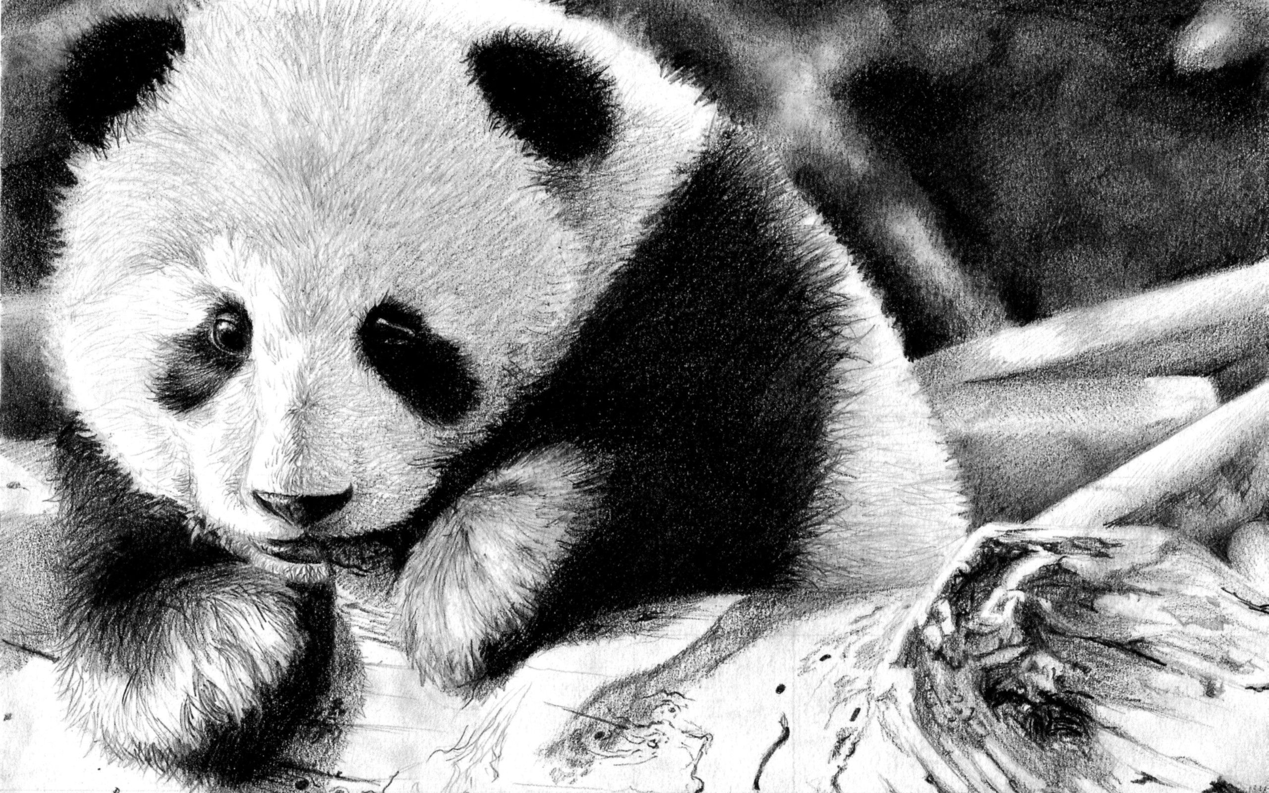 70660 Screensavers and Wallpapers Bw for phone. Download Animals, Muzzle, Color, Bw, Chb, Panda pictures for free