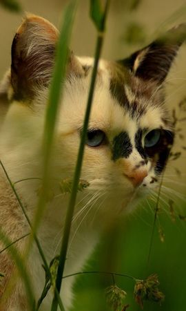 146837 download wallpaper Animals, Cat, Muzzle, Grass, Spotted, Spotty screensavers and pictures for free