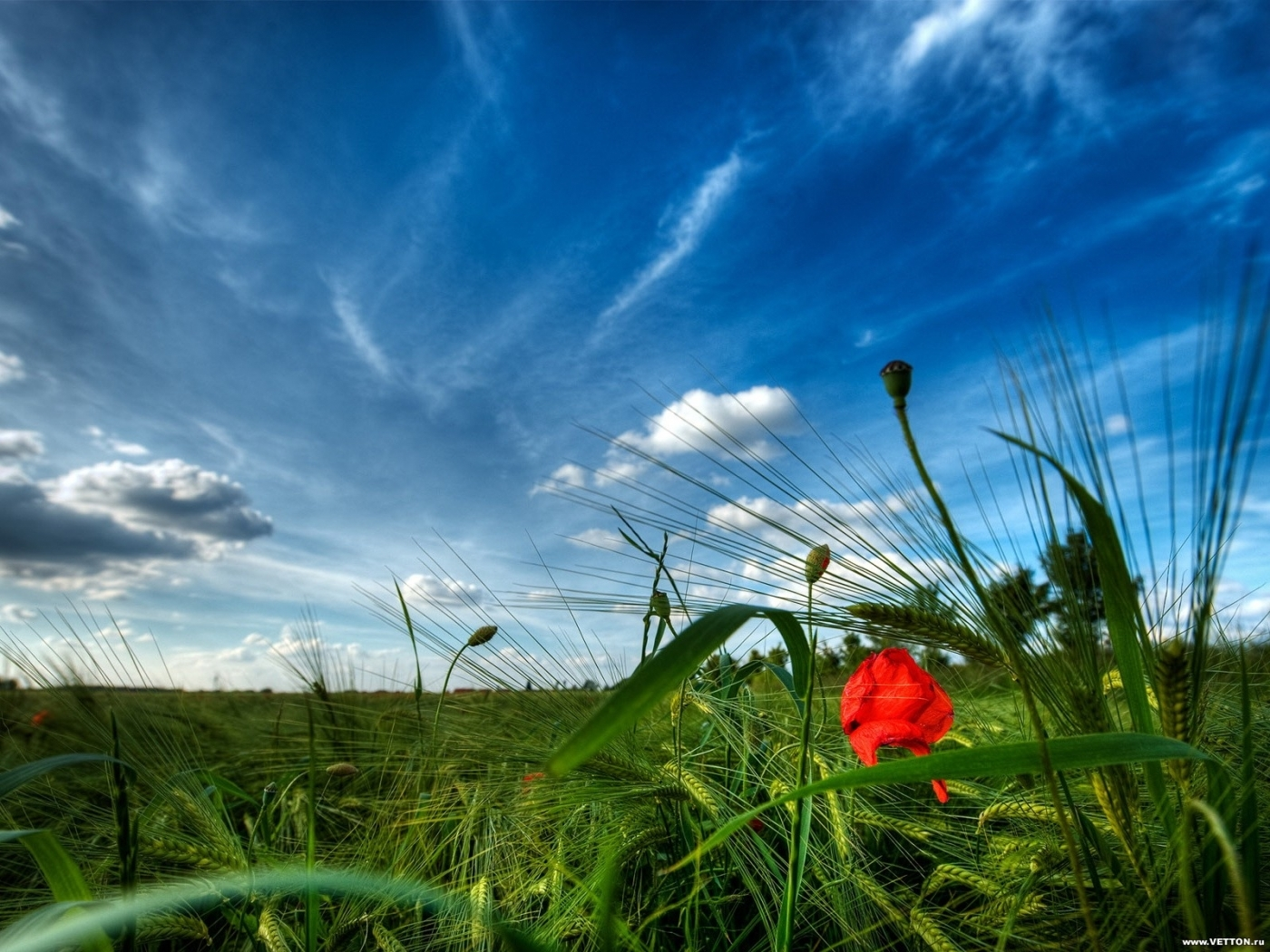 Скачать картинку Небо, Облака, Растения, Поля, Пейзаж в телефон бесплатно.