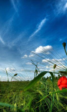 28455 скачать обои Растения, Пейзаж, Поля, Небо, Облака - заставки и картинки бесплатно