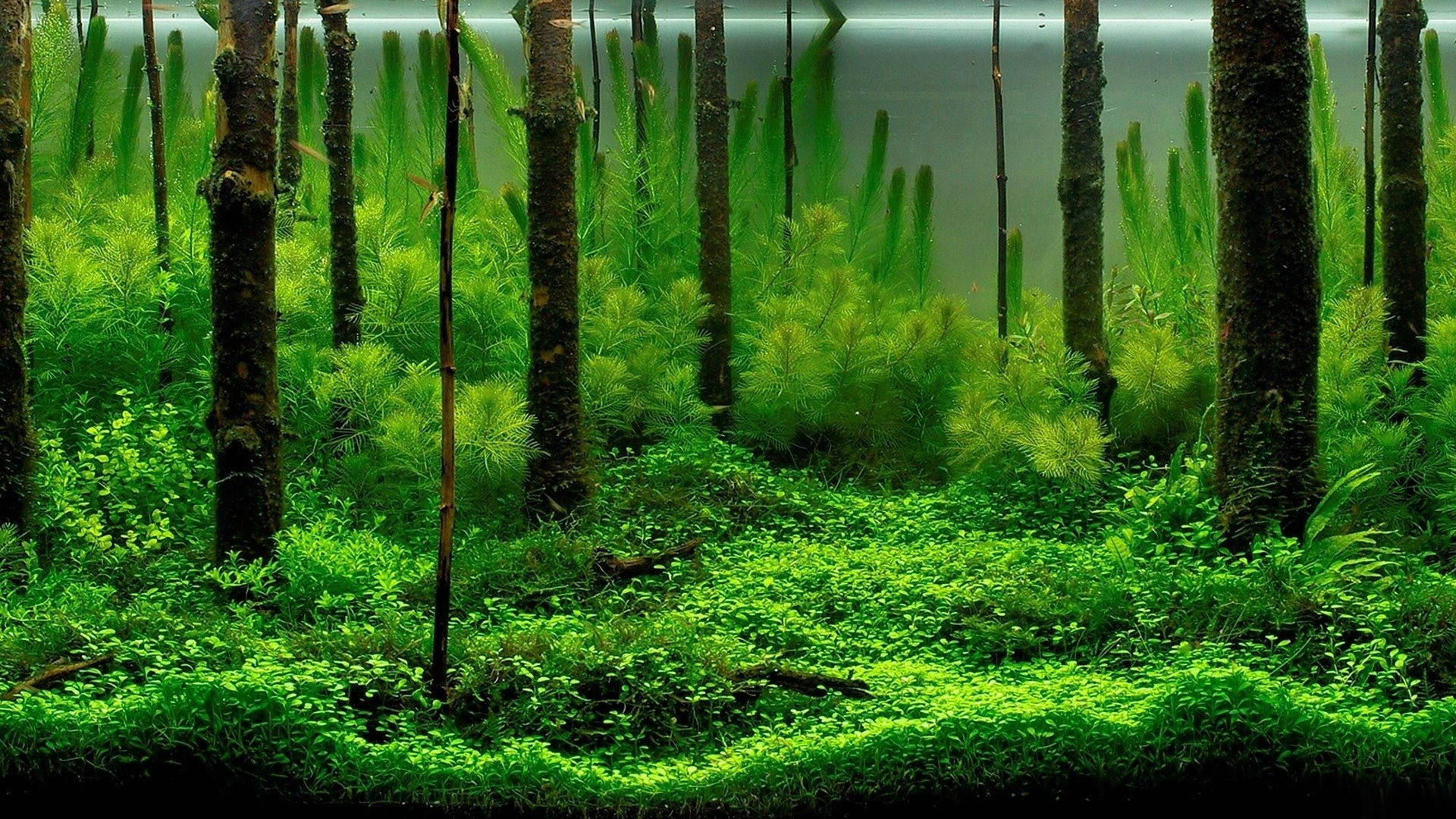 23244 download wallpaper Plants, Aquariums screensavers and pictures for free