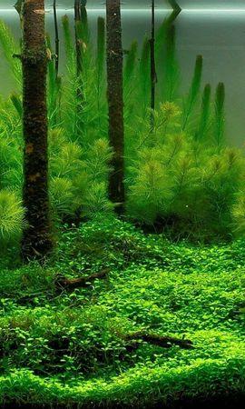 23244 скачать обои Растения, Аквариумы - заставки и картинки бесплатно