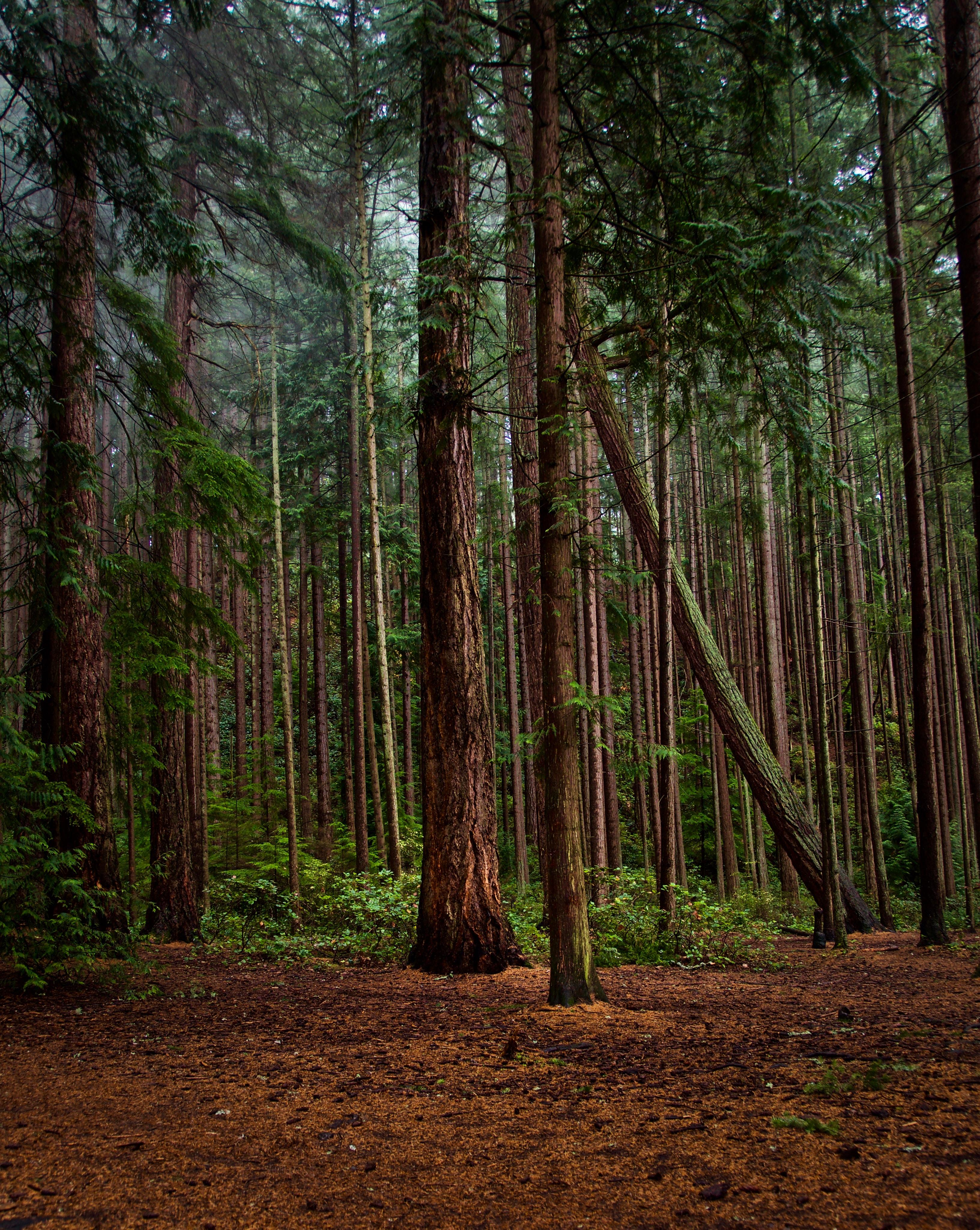 73272 скачать обои Природа, Лес, Зеленый, Кусты, Сосны - заставки и картинки бесплатно