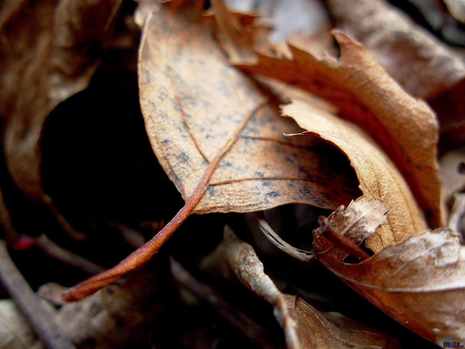Скачать картинку Листья, Осень, Растения в телефон бесплатно.