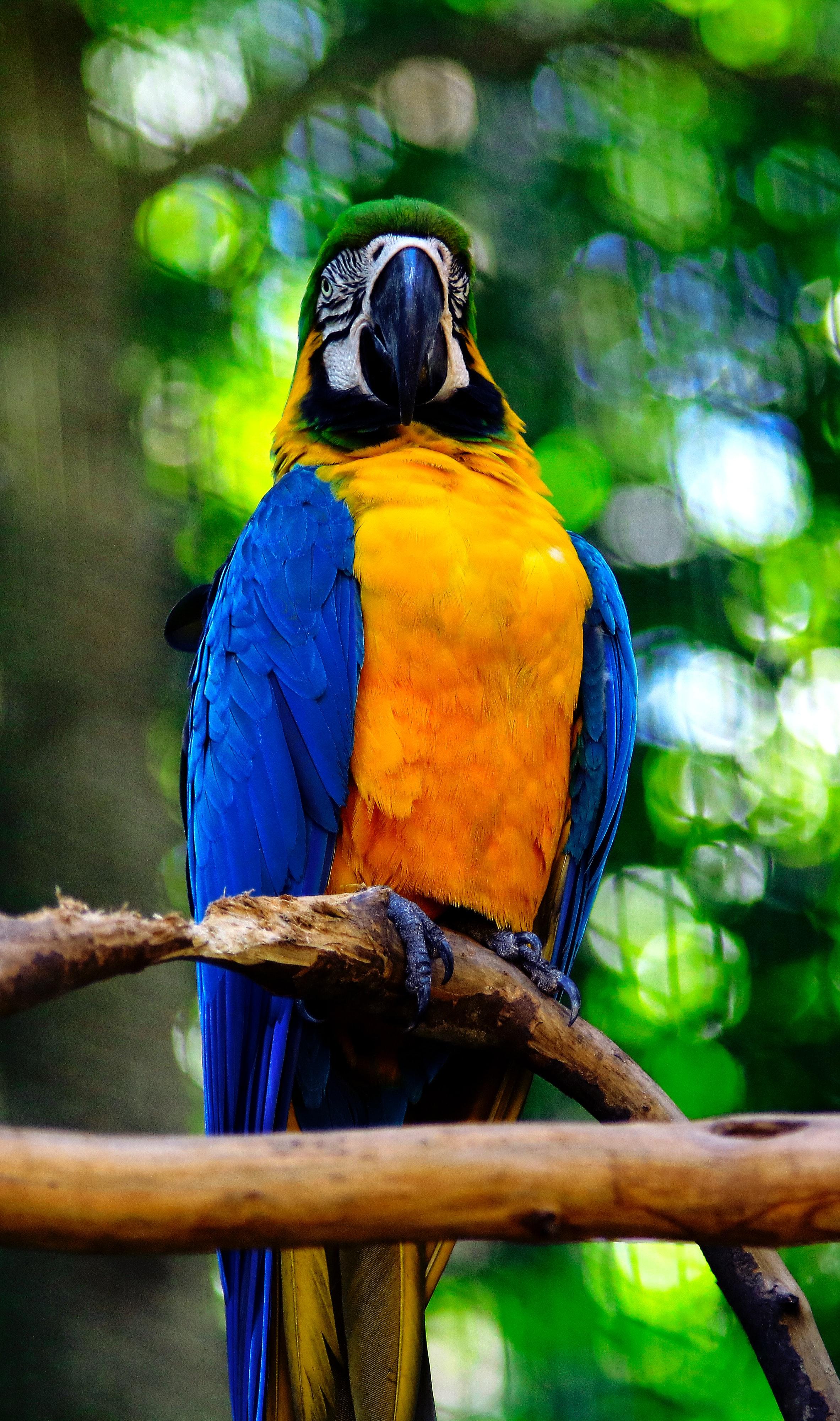 137800 скачать обои Животные, Ара, Попугаи, Птица, Ветка - заставки и картинки бесплатно