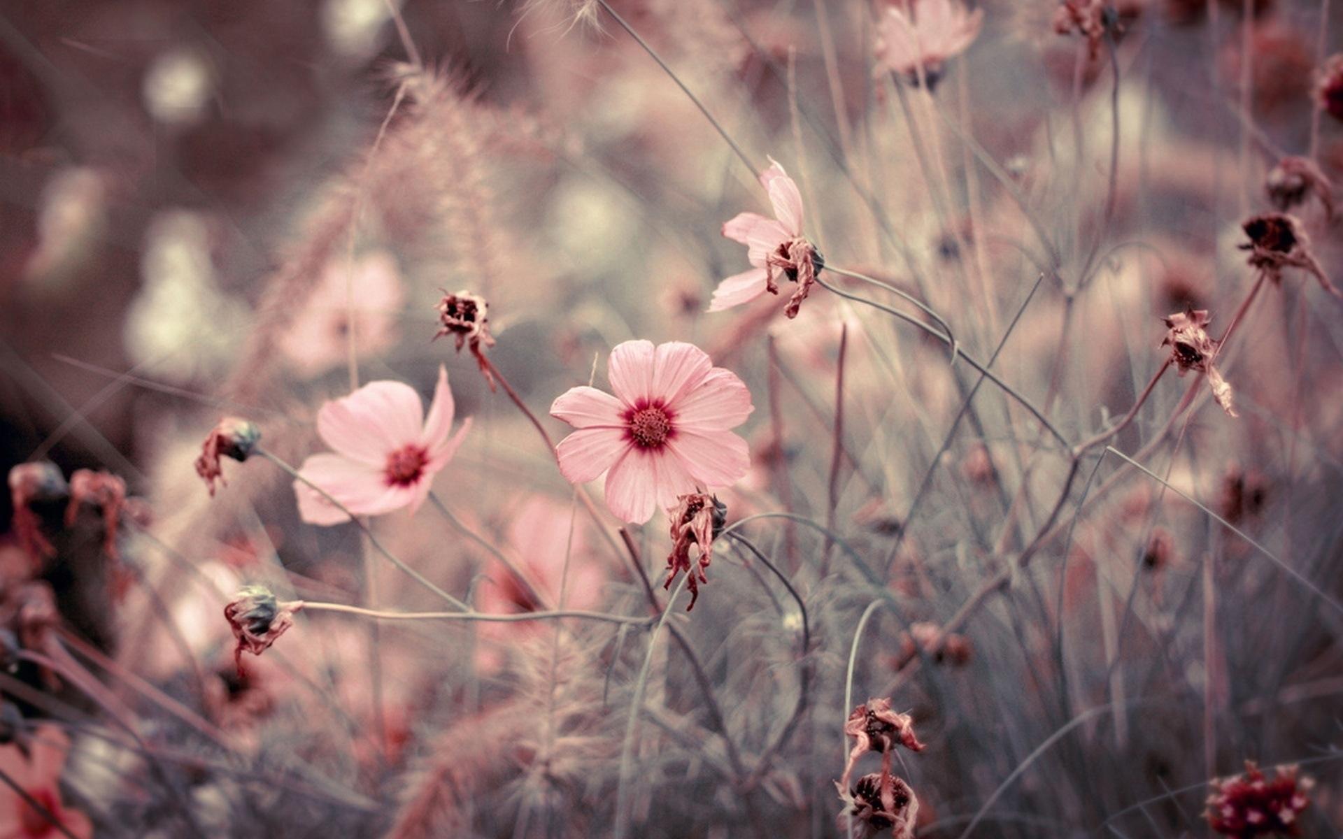 31127 скачать обои Растения, Цветы - заставки и картинки бесплатно