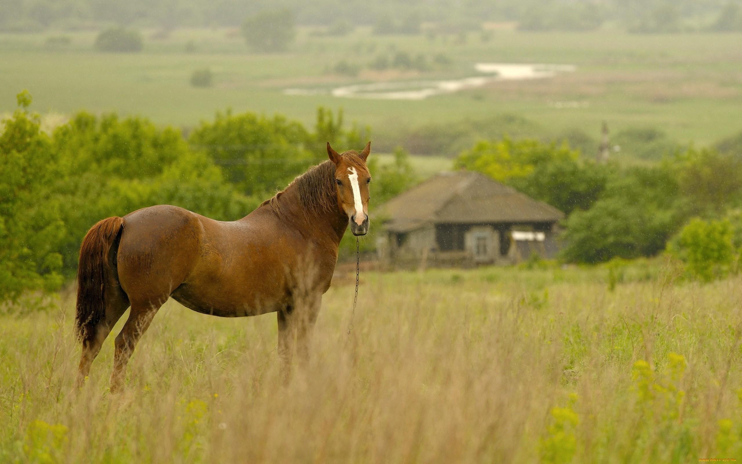 48210 скачать обои Животные, Лошади - заставки и картинки бесплатно