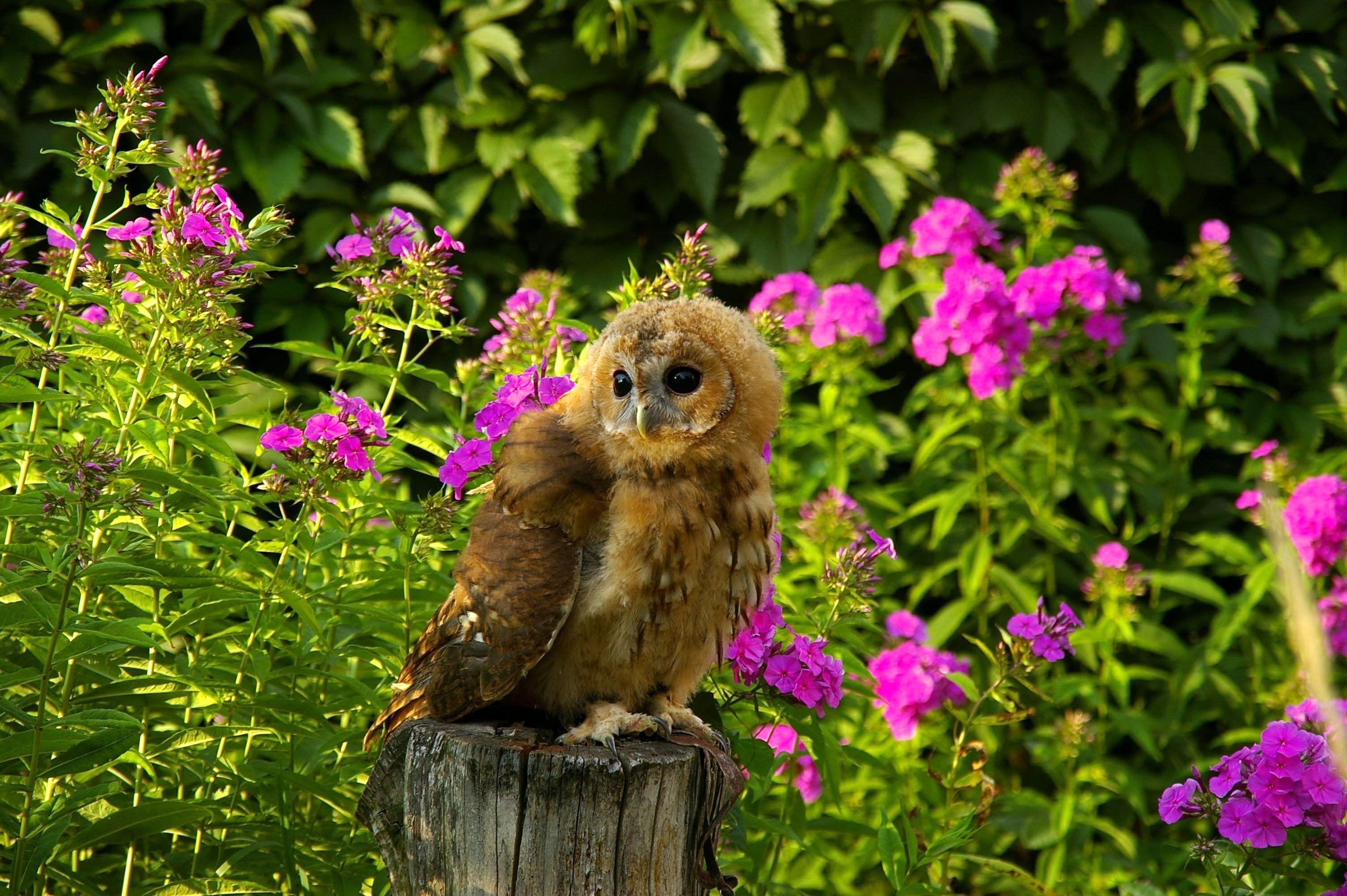 125903 скачать обои Трава, Животные, Цветы, Птица, Сидеть, Сова, Хищник, Бревно - заставки и картинки бесплатно
