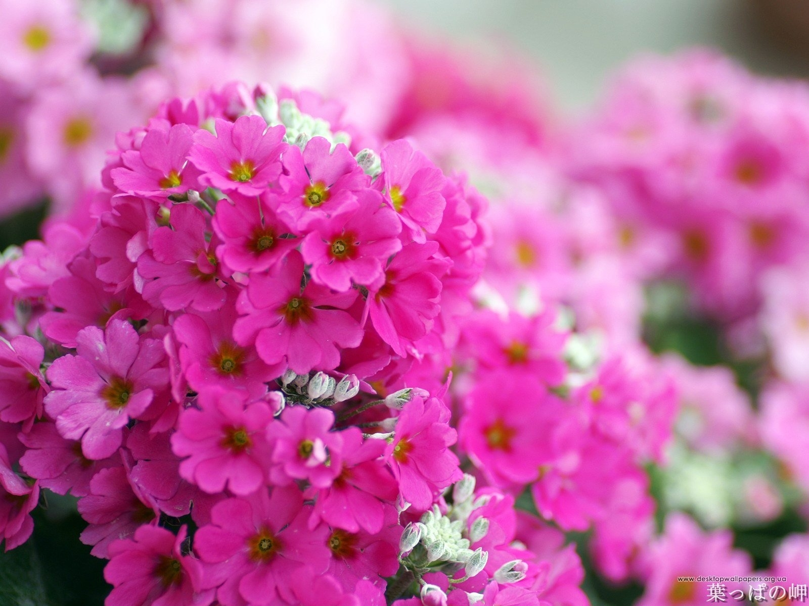 4107 скачать обои Растения, Цветы - заставки и картинки бесплатно