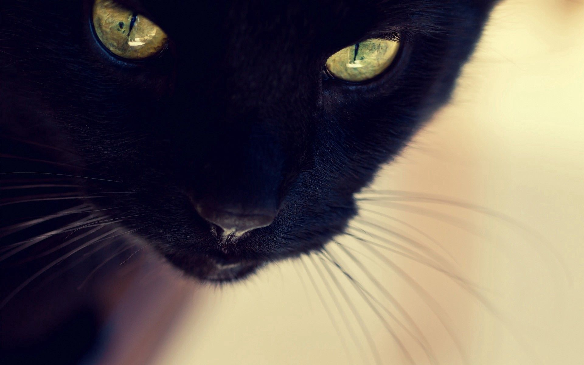 74049 download wallpaper Animals, Black Cat, Muzzle, Eyes, Nose, Mustache, Moustache screensavers and pictures for free
