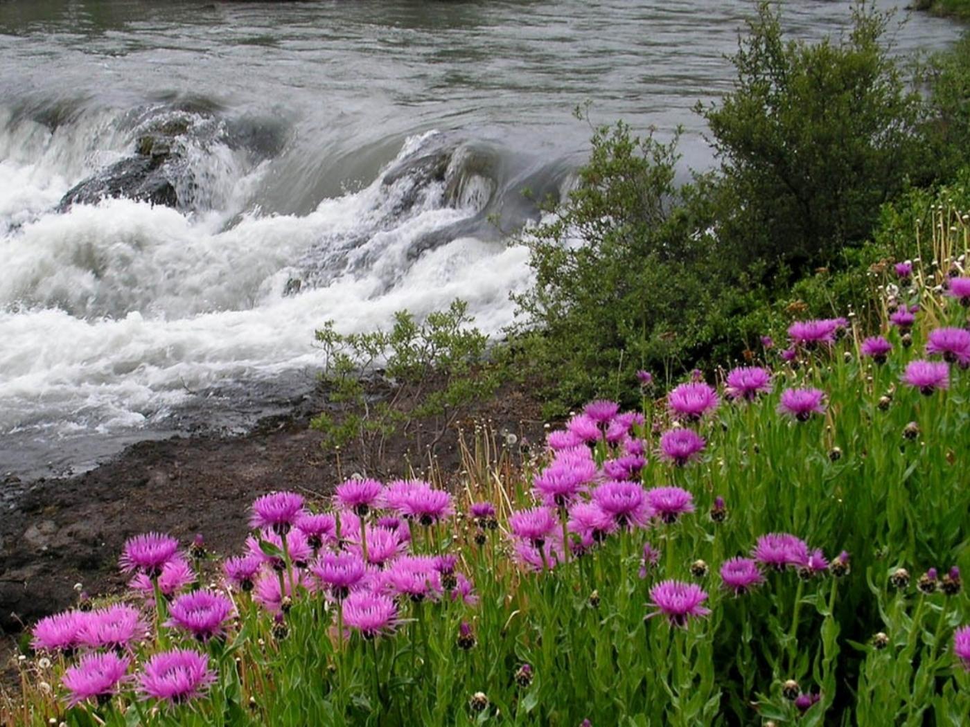 26306 скачать обои Пейзаж, Цветы, Река - заставки и картинки бесплатно