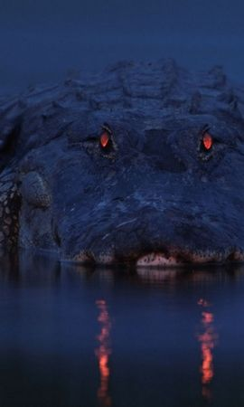 28469 baixar papel de parede Animais, Crocodiles - protetores de tela e imagens gratuitamente