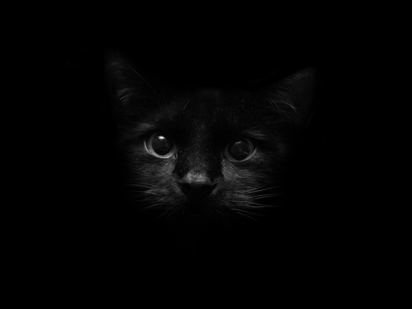 免費壁紙40742:动物, 猫 下載手機圖片