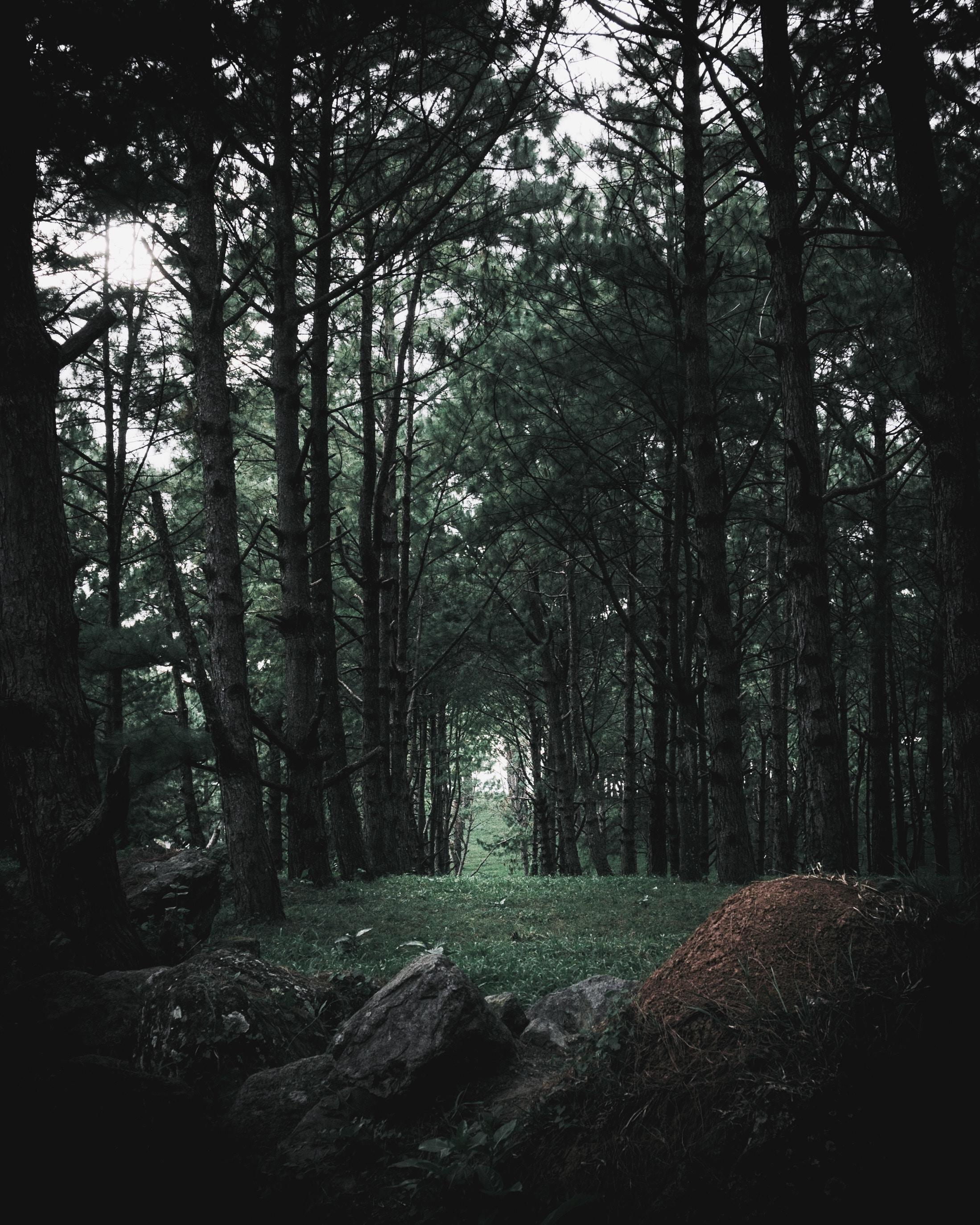 101009 Hintergrundbild 240x400 kostenlos auf deinem Handy, lade Bilder Natur, Bäume, Stones, Kiefer, Nadel, Wald, Nadelholz 240x400 auf dein Handy herunter