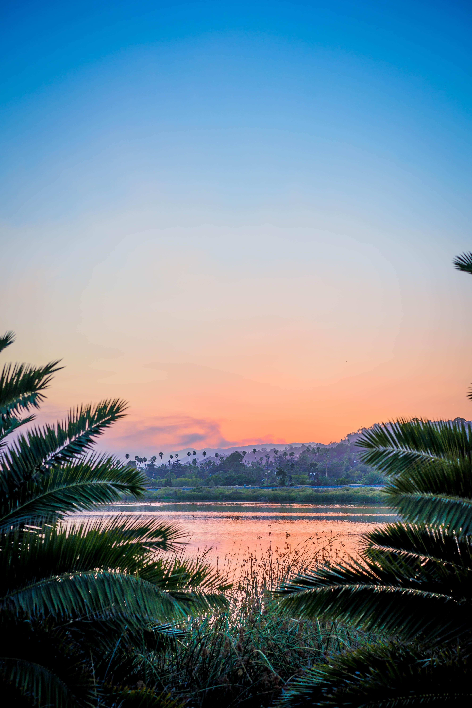 60381 Hintergrundbild 1024x768 kostenlos auf deinem Handy, lade Bilder Natur, Sunset, Grass, Usa, See, Geäst, Zweige, Santa Barbara 1024x768 auf dein Handy herunter