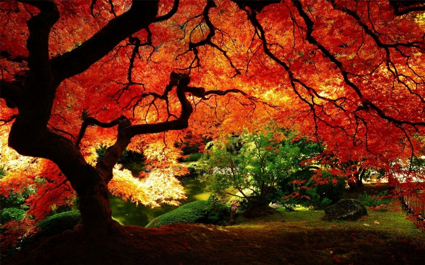 28746 download wallpaper Landscape, Trees, Autumn screensavers and pictures for free