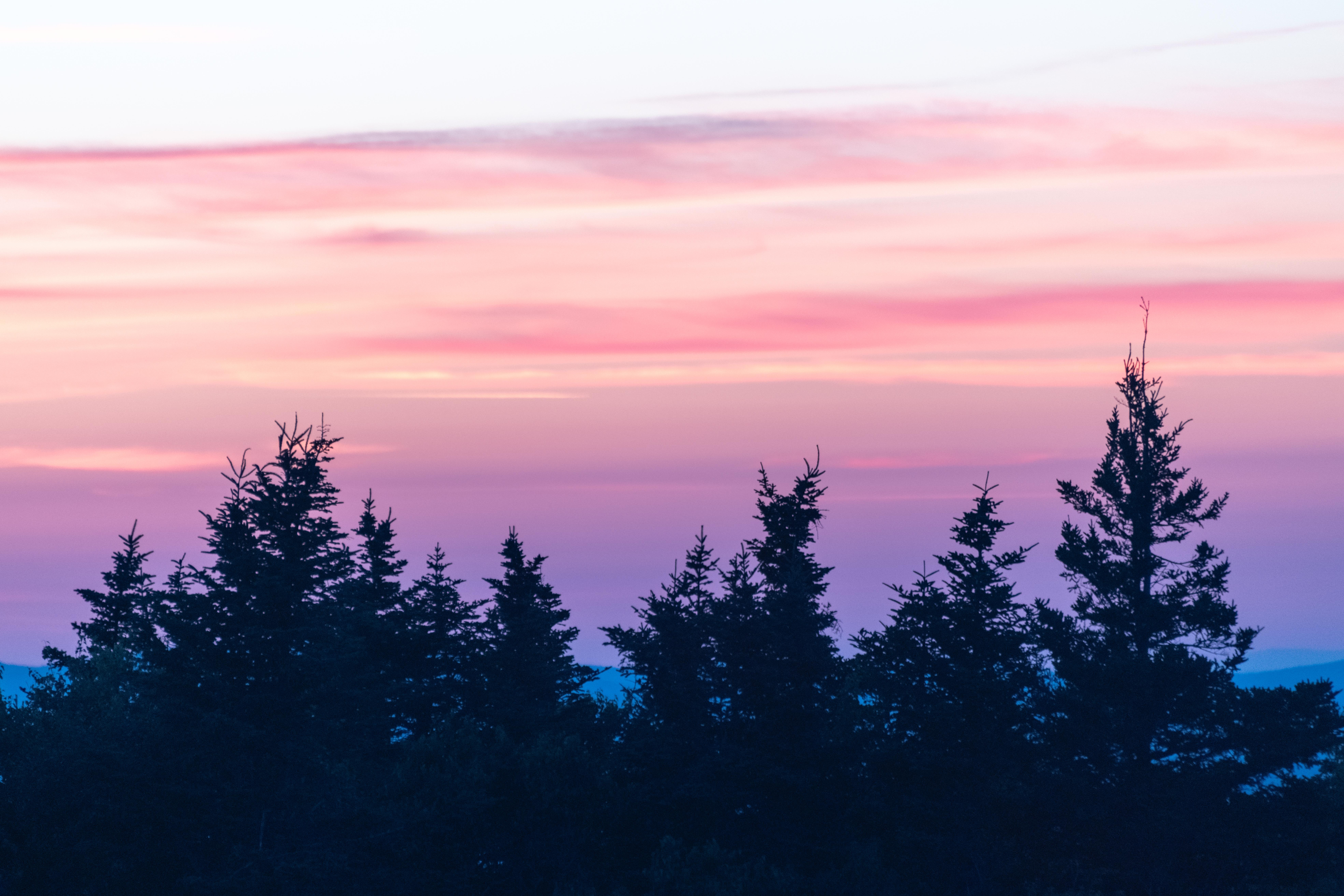 153370 скачать обои Природа, Закат, Облака, Туман, Розовый, Елки - заставки и картинки бесплатно