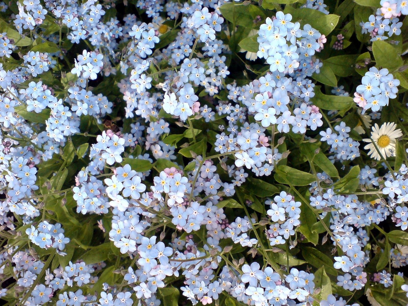 4234 скачать обои Растения, Цветы, Фон - заставки и картинки бесплатно