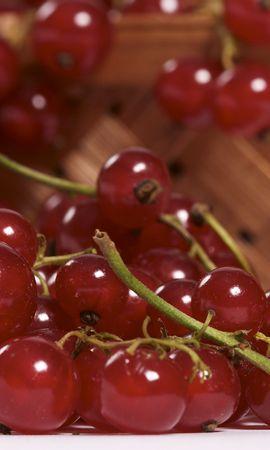 5571 télécharger le fond d'écran Fruits, Nourriture, Baies, Groseille - économiseurs d'écran et images gratuitement