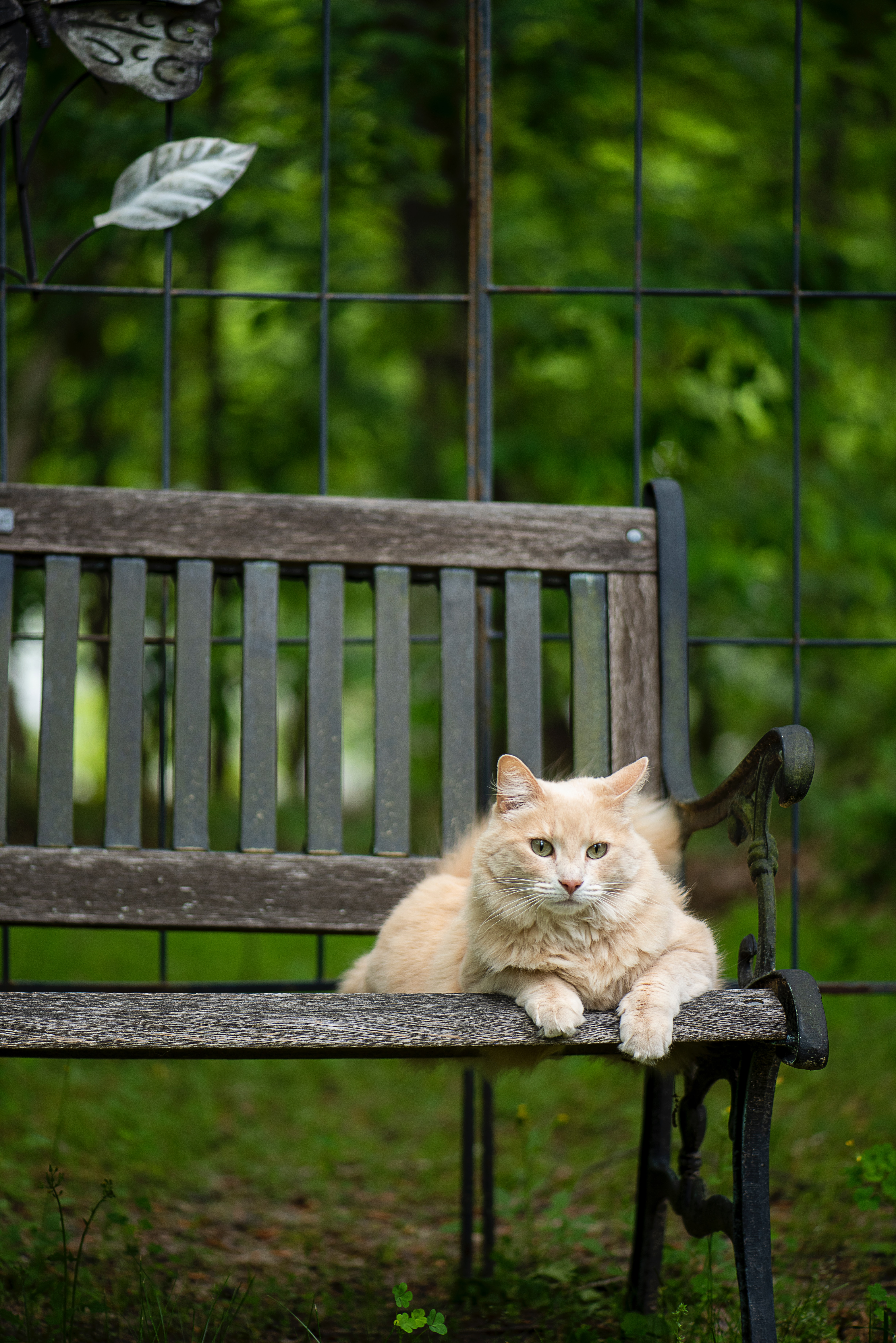 155955 Screensavers and Wallpapers Bench for phone. Download Animals, Cat, Fluffy, Pet, Animal, Bench pictures for free