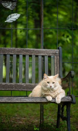 155955 download wallpaper Animals, Cat, Fluffy, Bench, Pet, Animal screensavers and pictures for free
