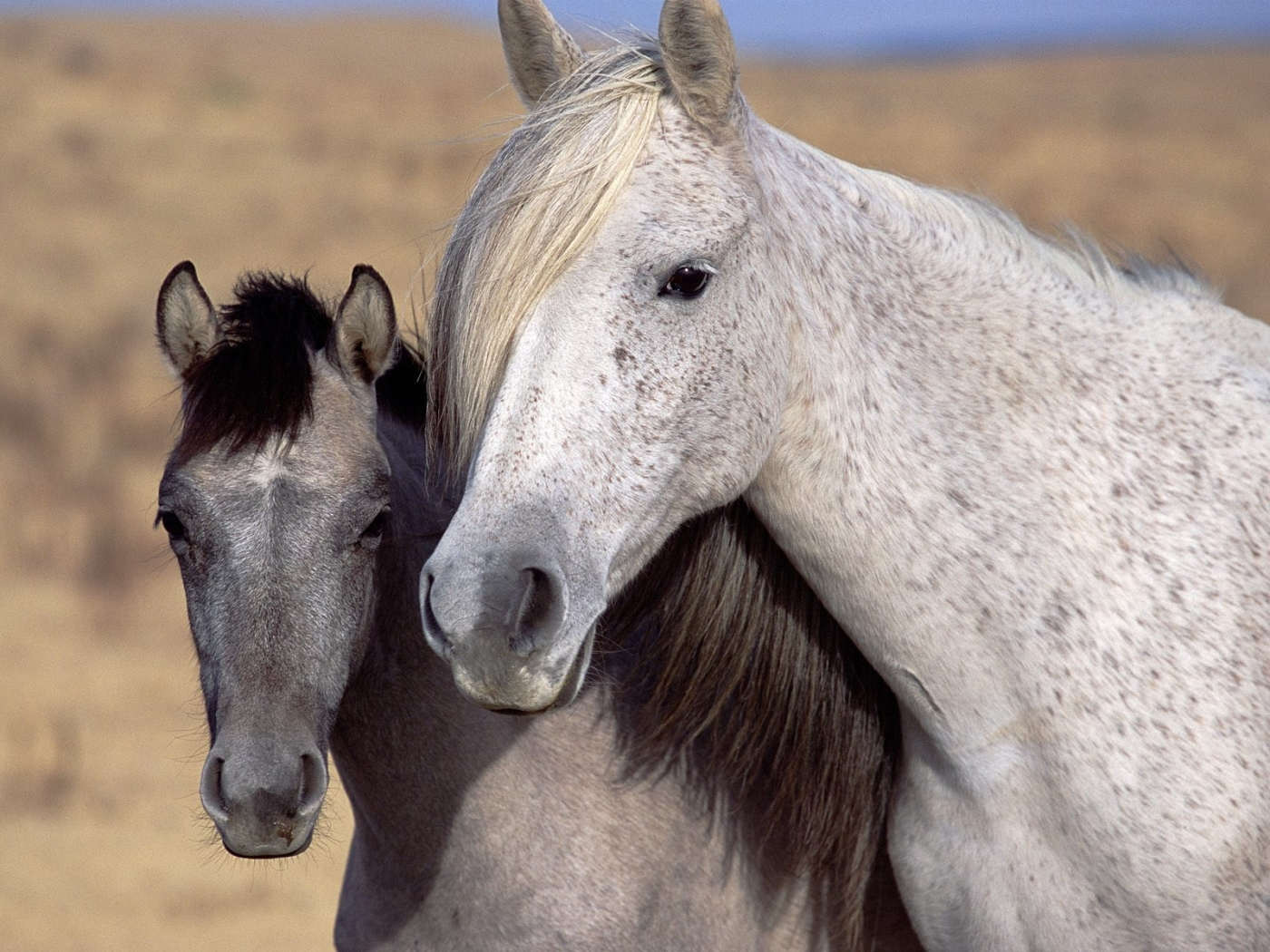 44801 download wallpaper Animals, Horses screensavers and pictures for free