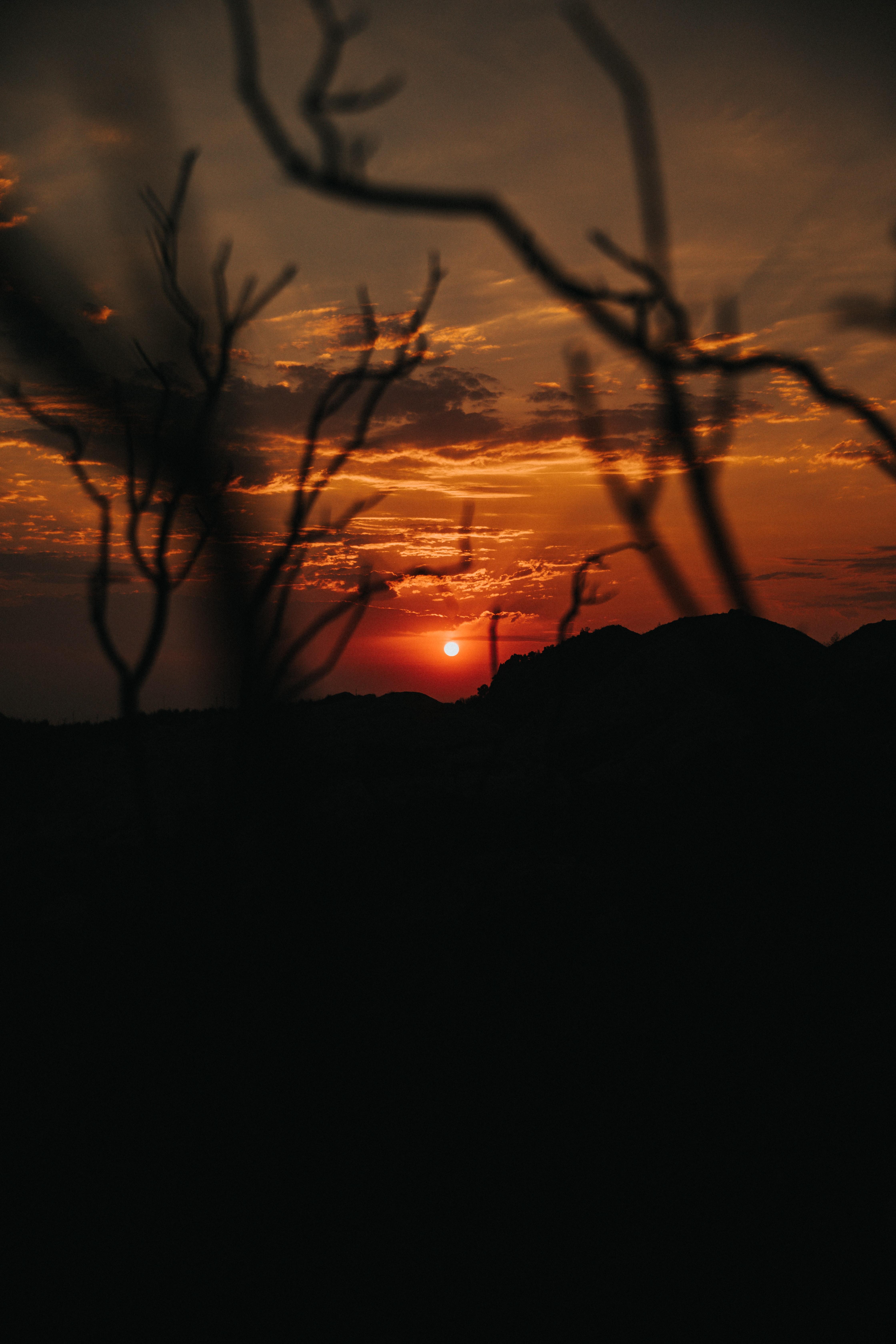 150862 скачать обои Природа, Закат, Ветки, Силуэт, Небо - заставки и картинки бесплатно