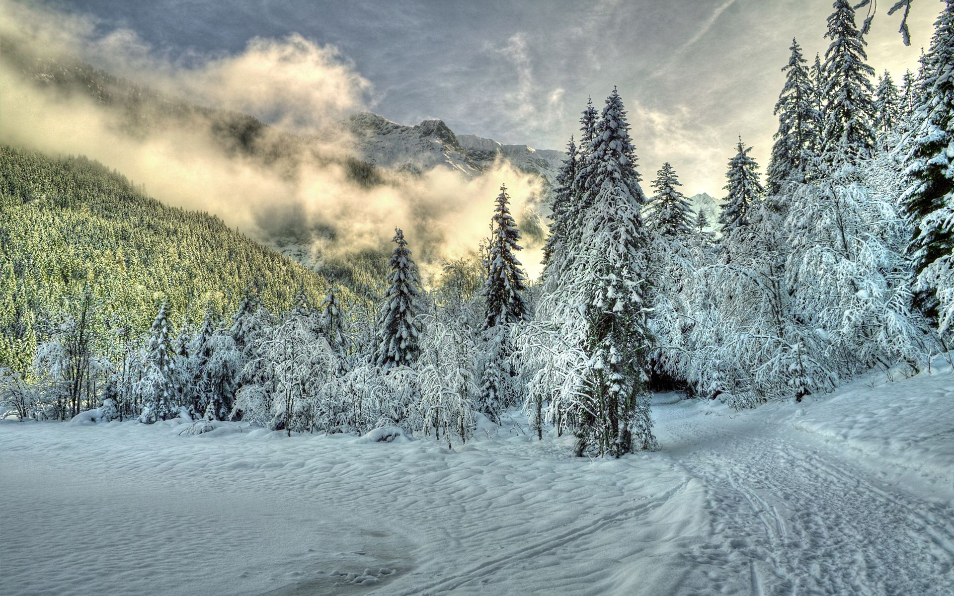 153490 Screensavers and Wallpapers Spruce for phone. Download Winter, Nature, Clouds, Snow, Forest, Fog, Spruce, Fir, Hills pictures for free