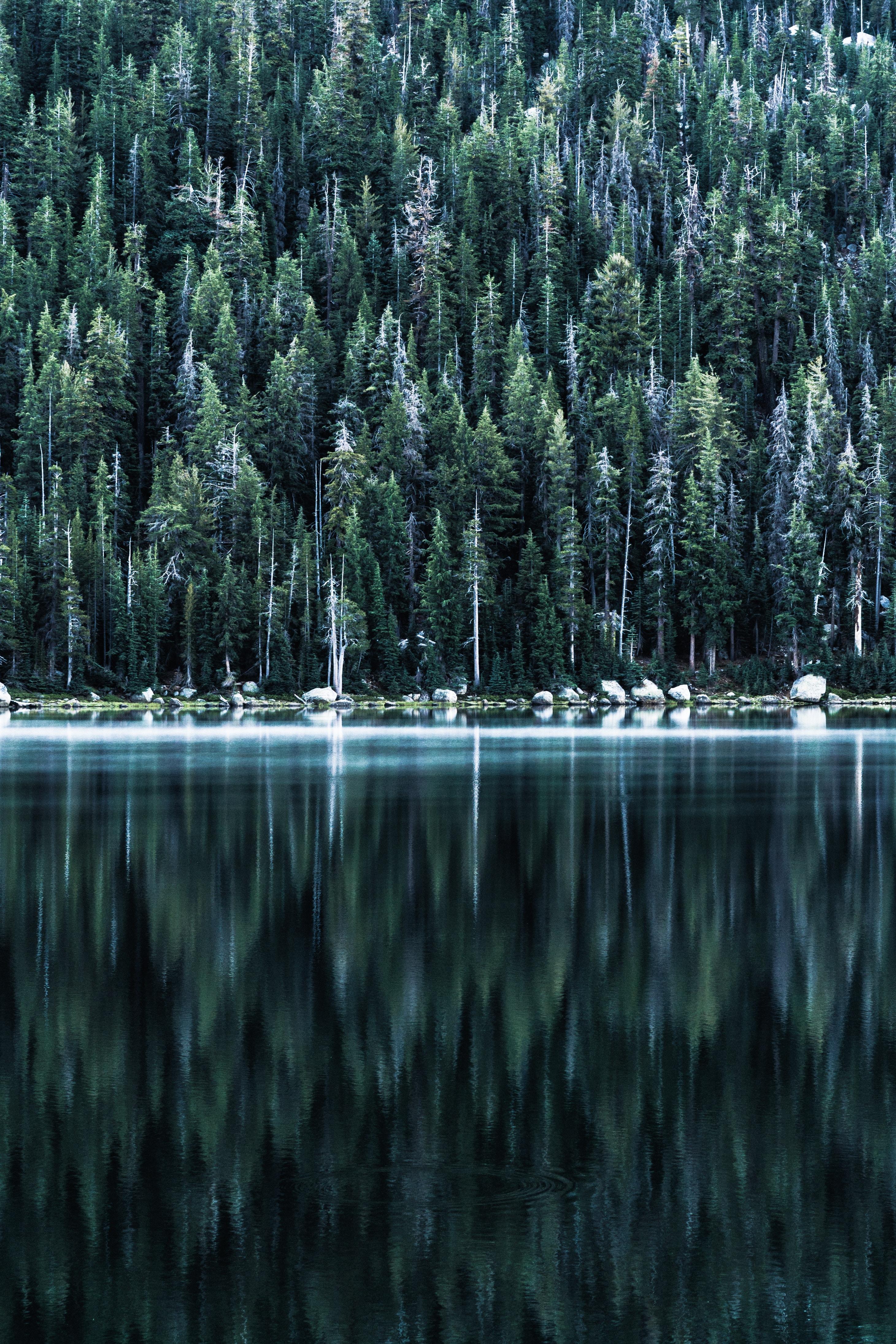 100355 Hintergrundbild 240x400 kostenlos auf deinem Handy, lade Bilder Natur, Bäume, See, Reflexion, Ufer, Bank, Wald 240x400 auf dein Handy herunter