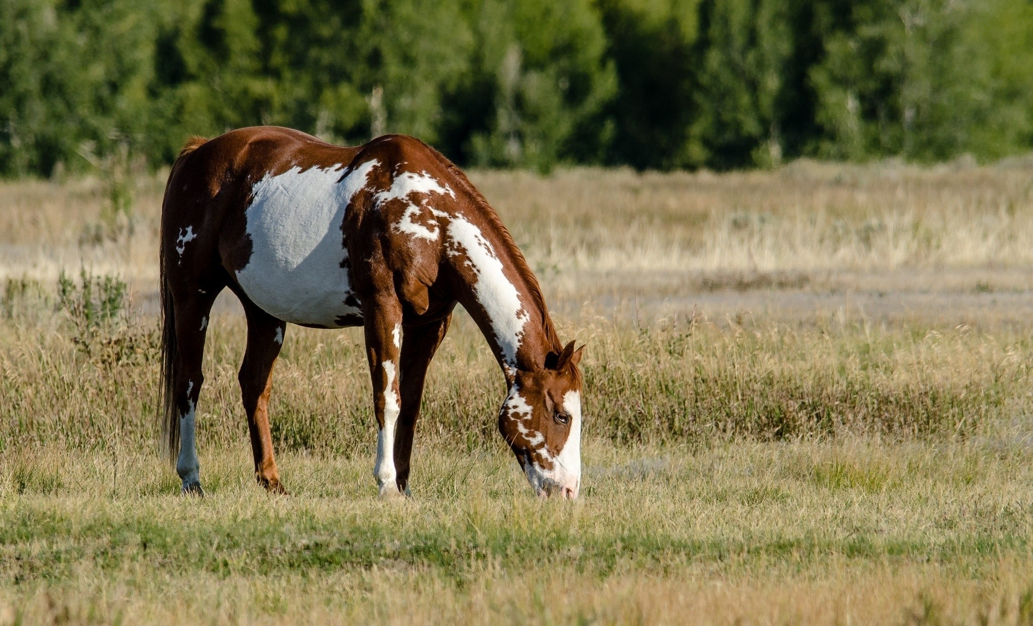 107417 download wallpaper Animals, Food, Grass, Spotted, Spotty, Field, Stroll, Horse screensavers and pictures for free