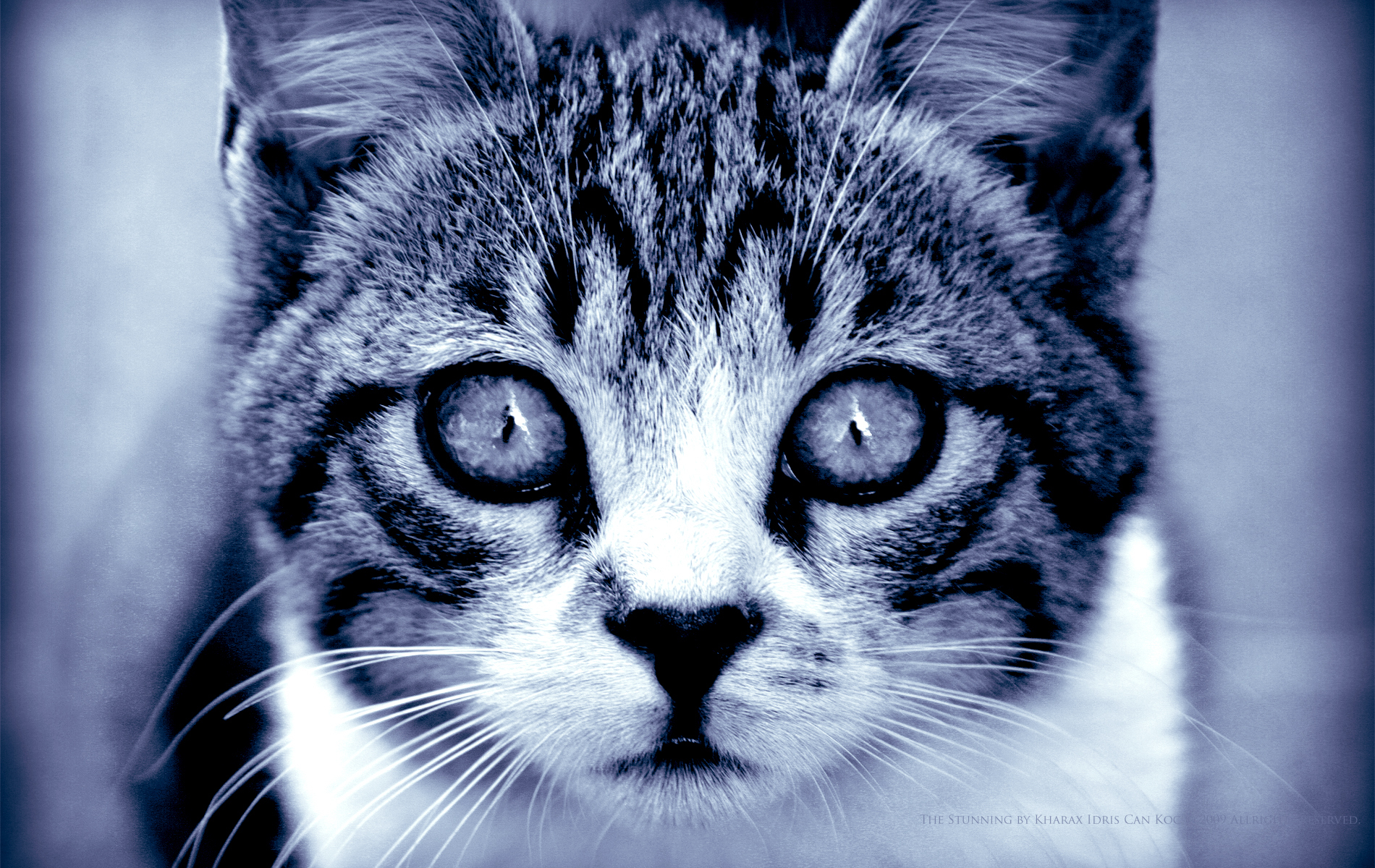 20669 download wallpaper Animals, Cats screensavers and pictures for free