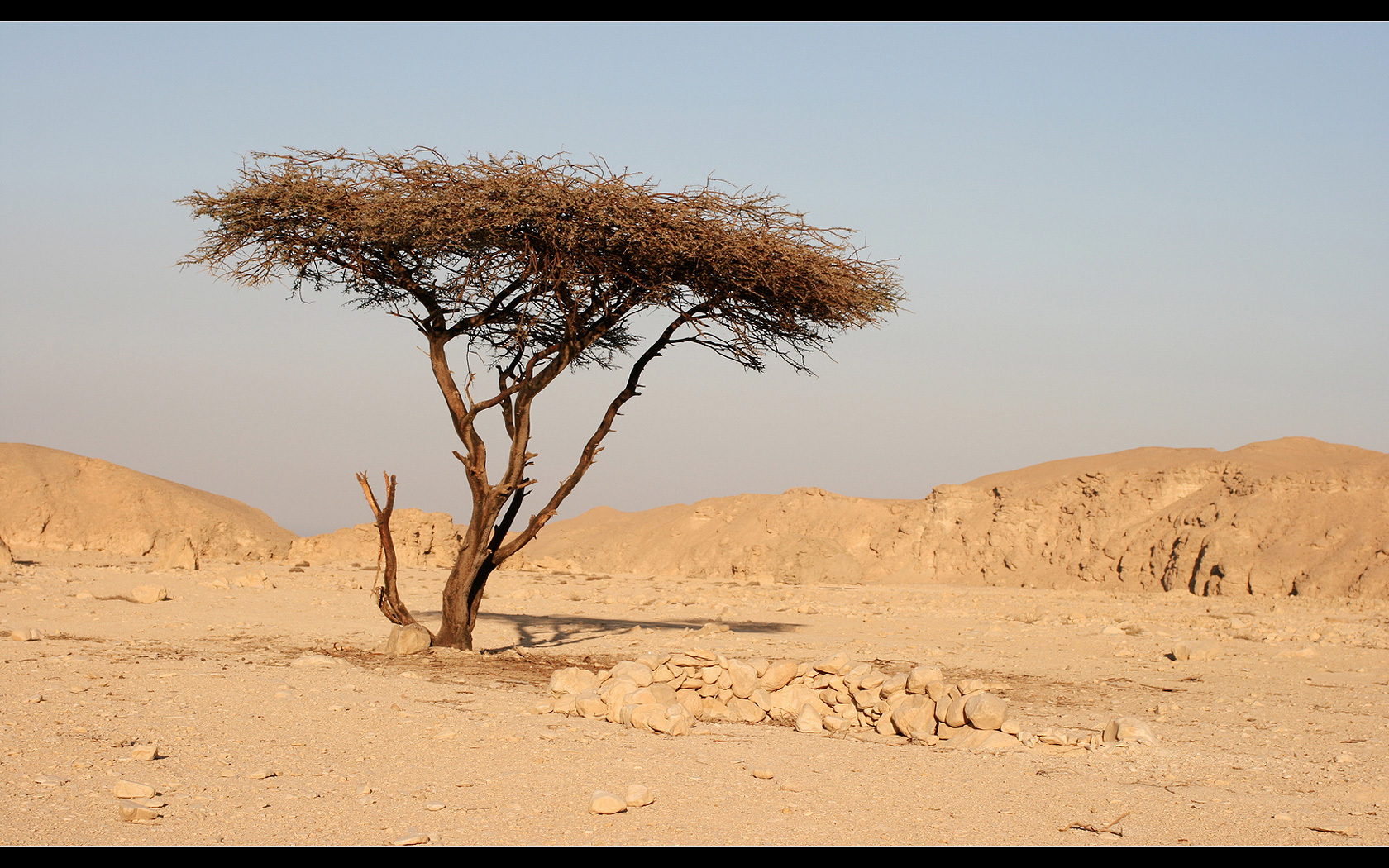 19908 download wallpaper Landscape, Trees, Savanna screensavers and pictures for free