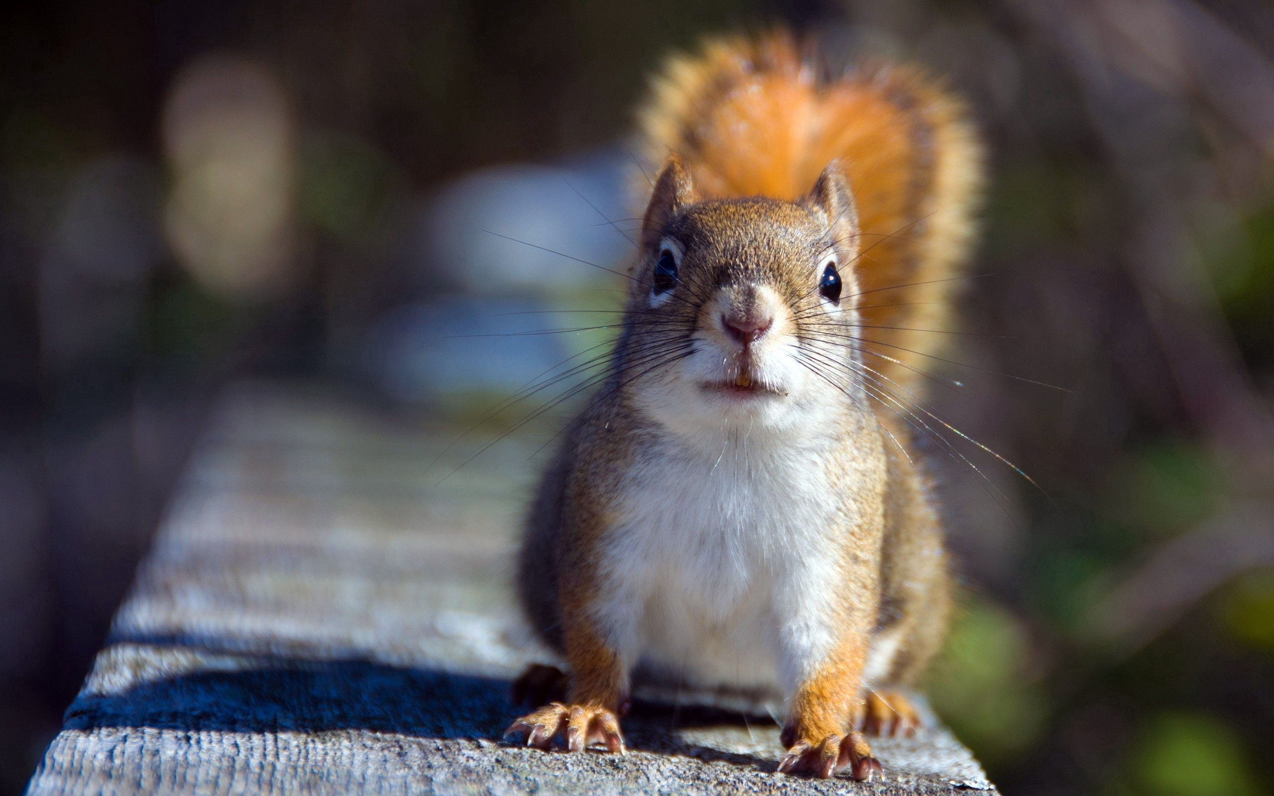 84067 download wallpaper Animals, Squirrel, Animal, Shadow, Sight, Opinion screensavers and pictures for free