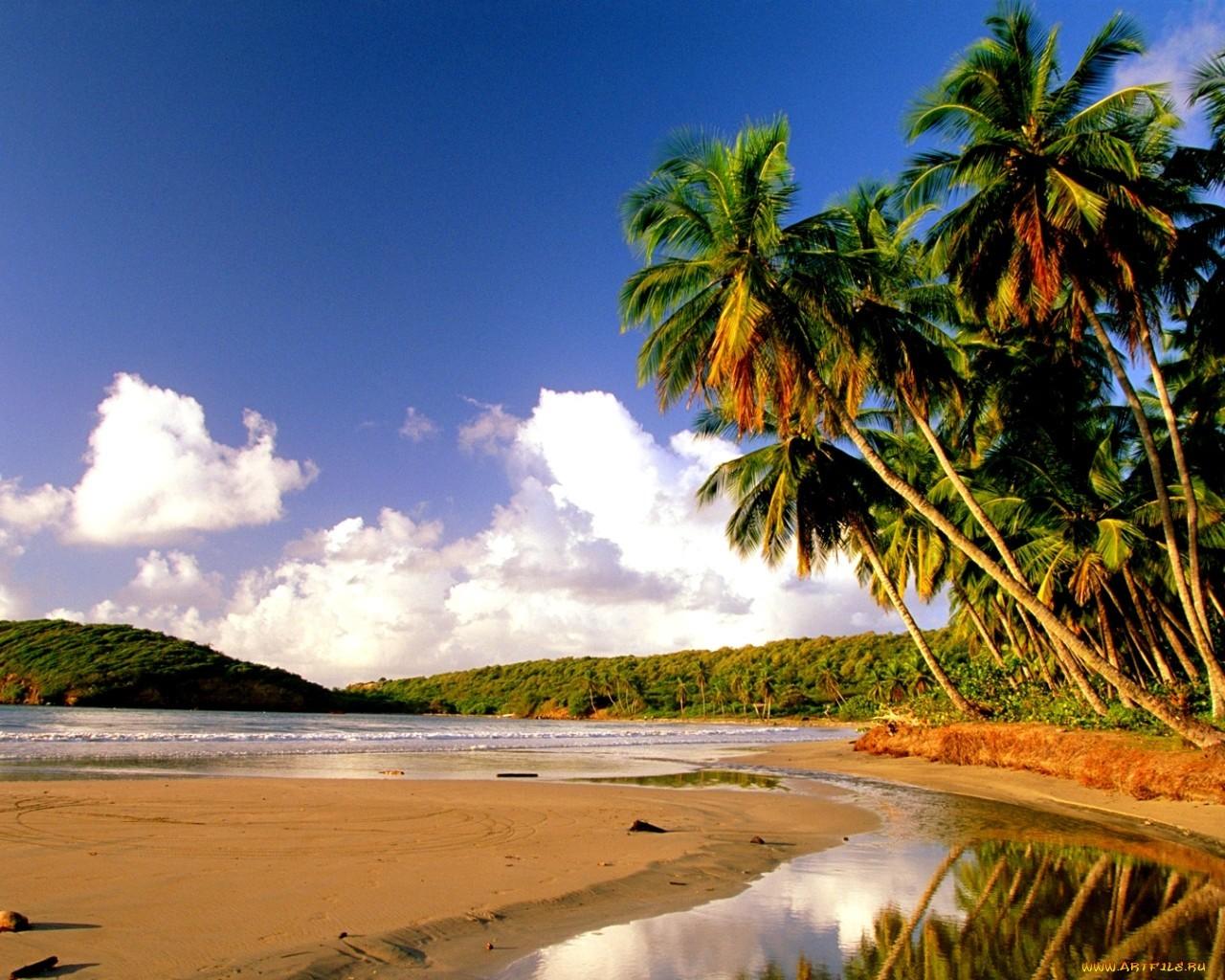 18437 скачать обои Пейзаж, Небо, Море, Облака, Пляж, Пальмы - заставки и картинки бесплатно