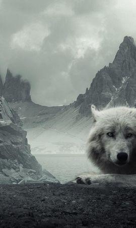 15385 baixar papel de parede Animais, Lobos - protetores de tela e imagens gratuitamente