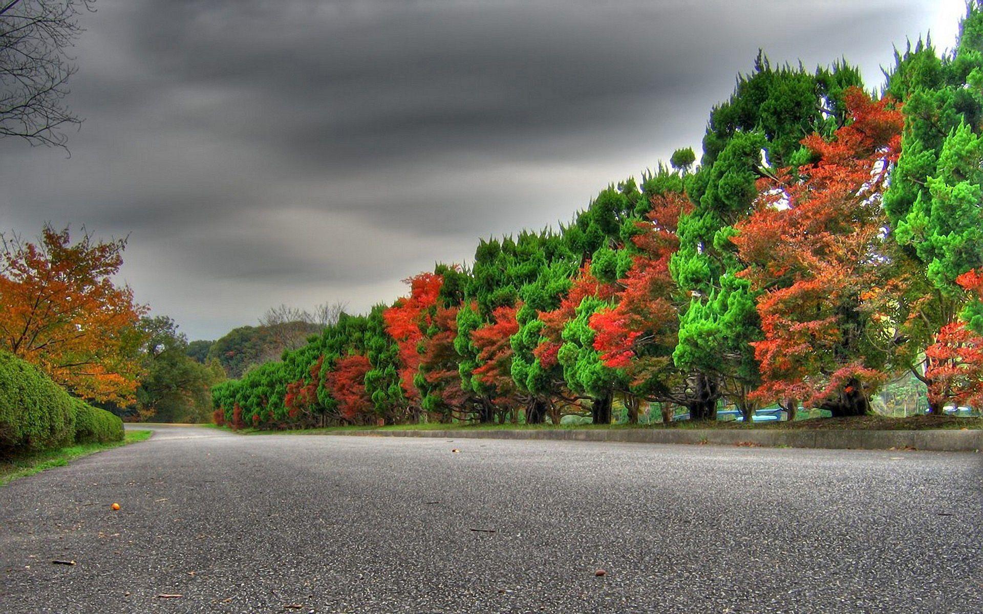 113569 скачать обои Красный, Природа, Деревья, Осень, Дорога, Зеленый, Чередование - заставки и картинки бесплатно