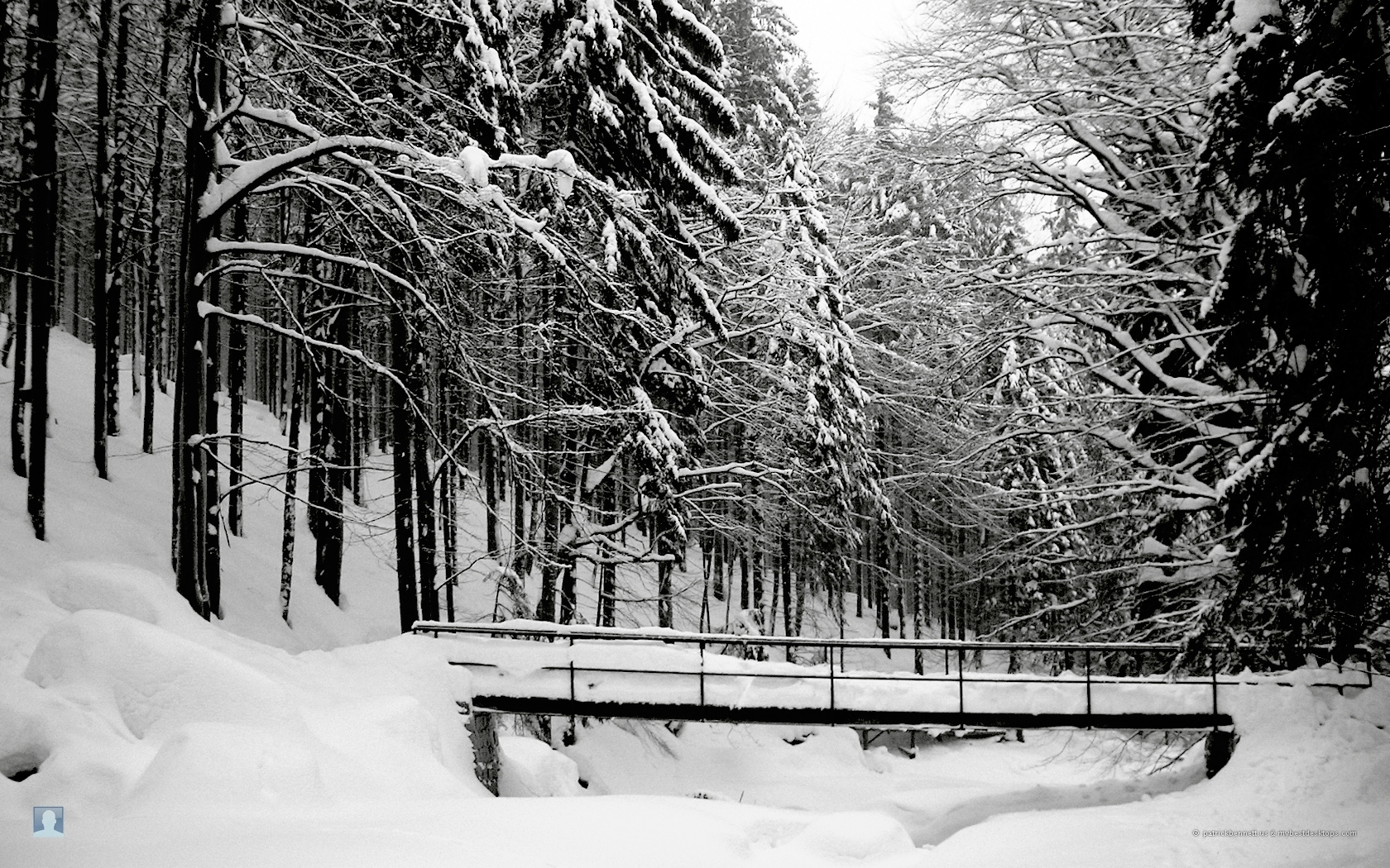 965 download wallpaper Landscape, Winter, Trees, Snow screensavers and pictures for free