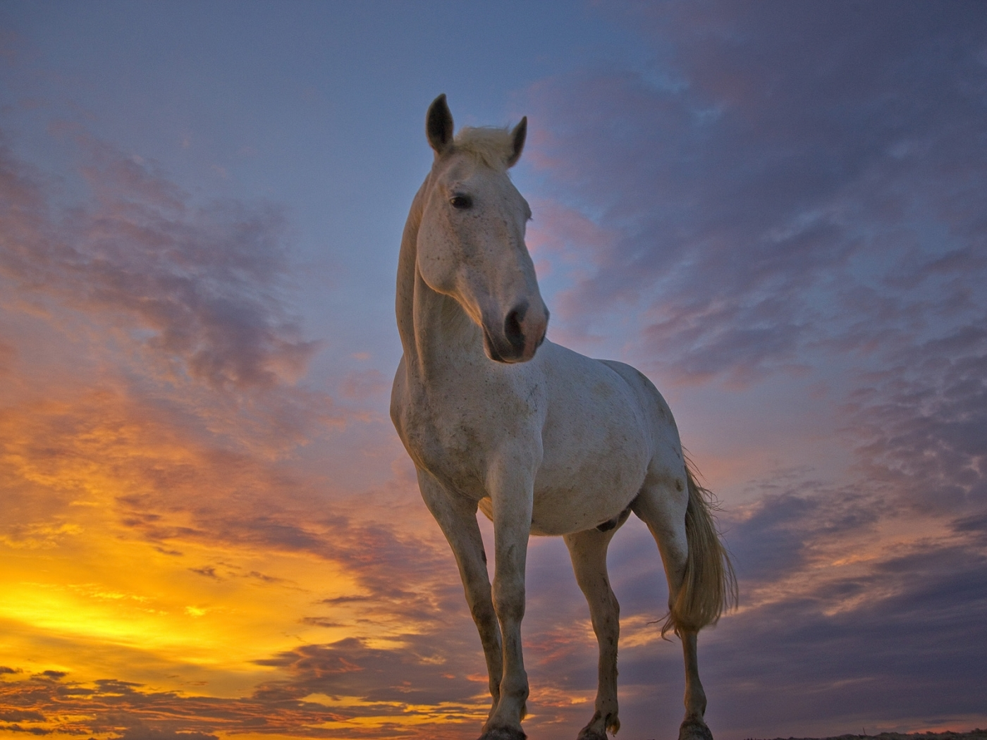 40691 download wallpaper Animals, Horses screensavers and pictures for free