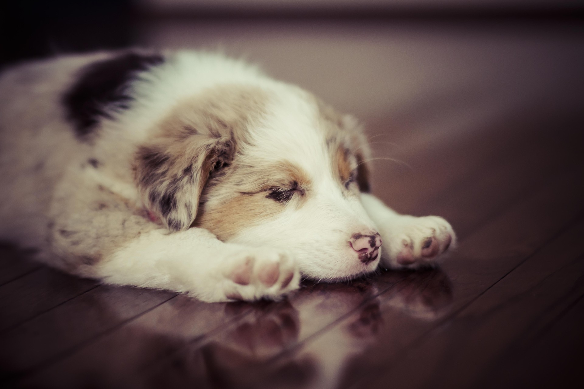 137786 download wallpaper Animals, Puppy, Dog, Sleep, Dream, Spotted, Spotty screensavers and pictures for free