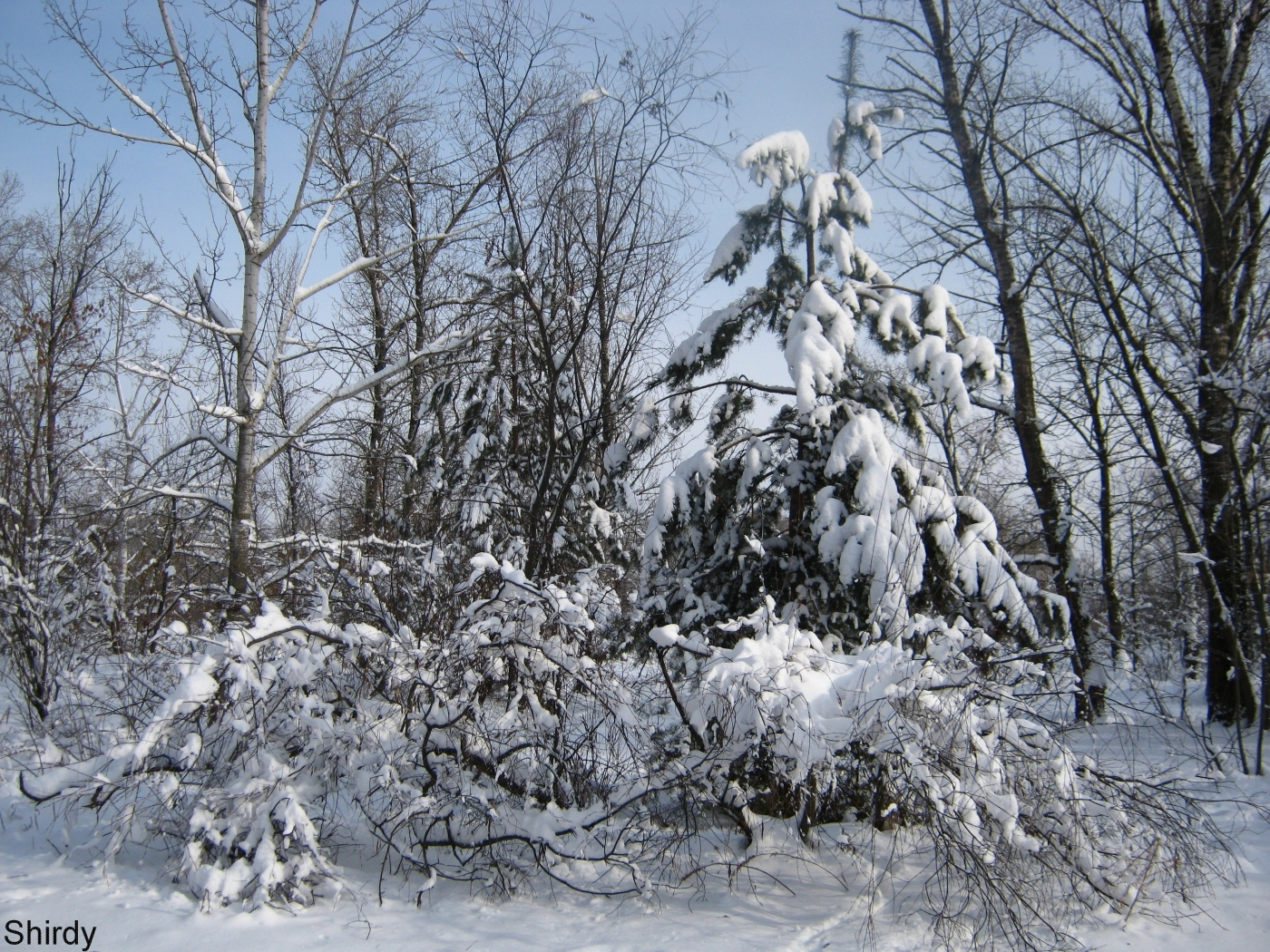 43657 download wallpaper Landscape, Winter screensavers and pictures for free